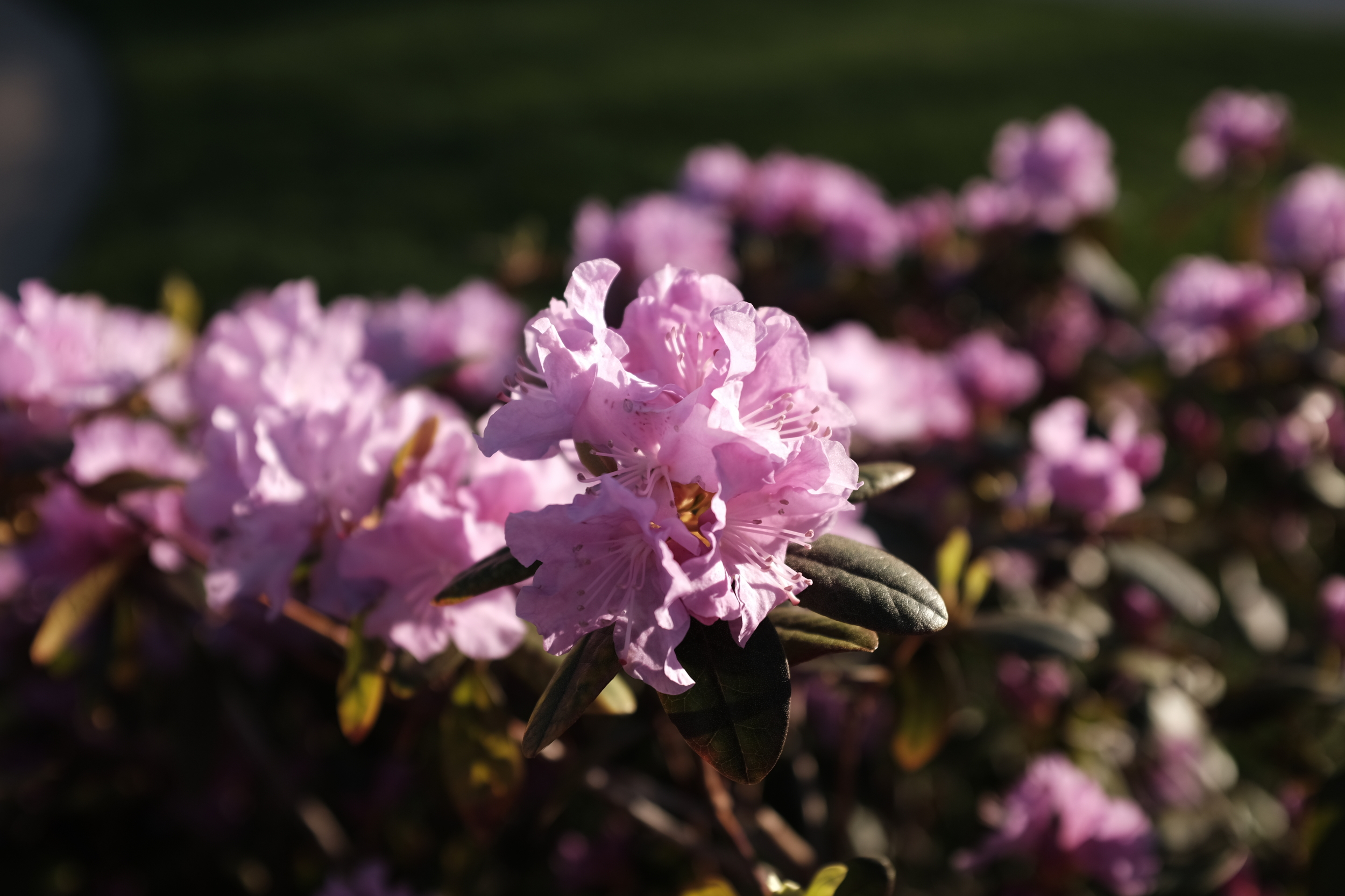 Used the macro option at F2 on these spring flowers. Beautiful bokeh.