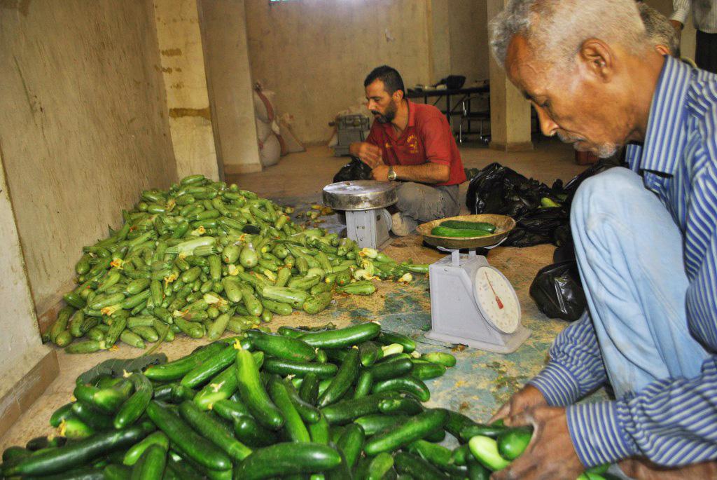 Garden Cucumbers1.jpg