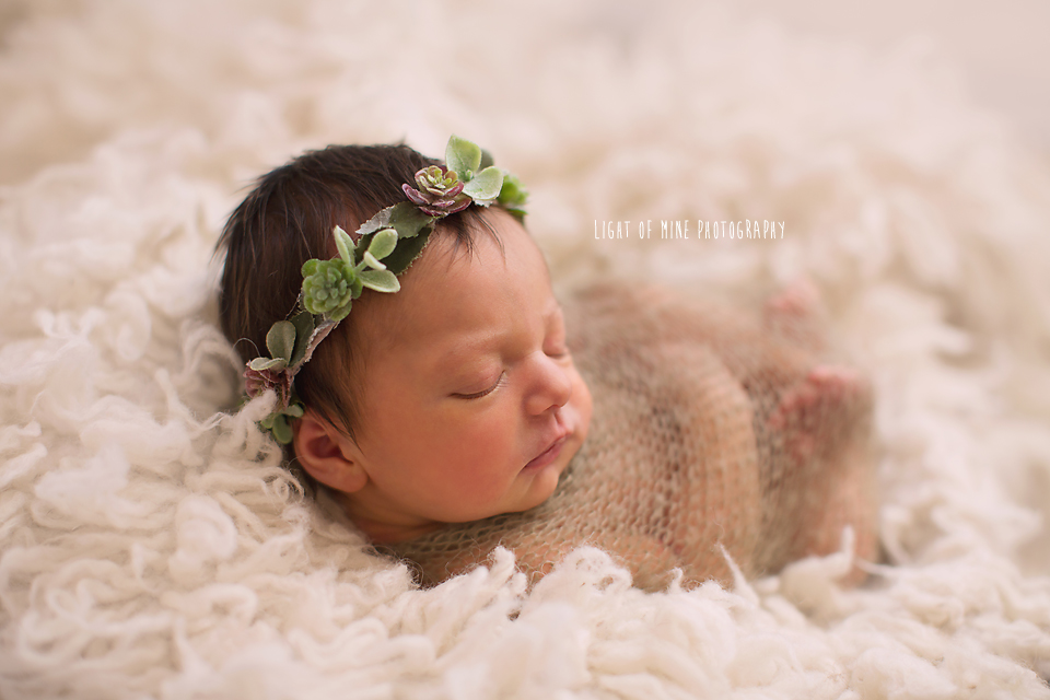 Watertown NY Newborn Photographer