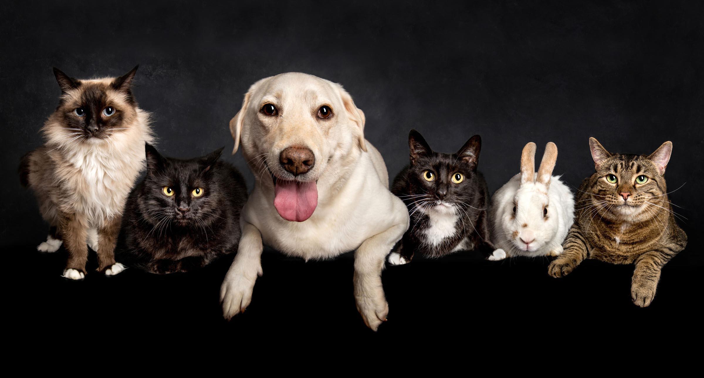 pet pets animal dog puppy cat adelaide sa south australia photographer photography_014.jpg