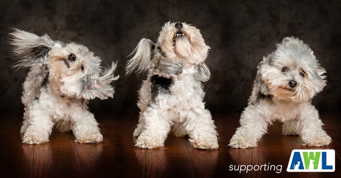 5 fluffy dog photography adelaide sa south australia.jpg