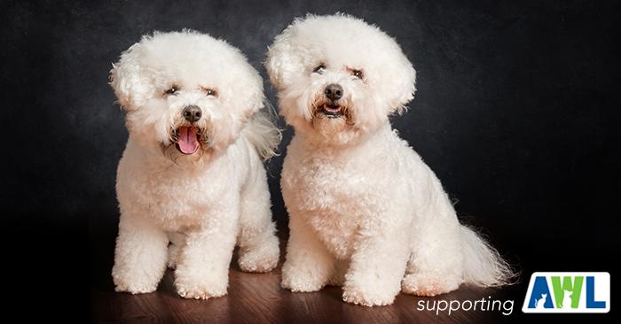 9 fluffy dog photography adelaide sa south australia.jpg