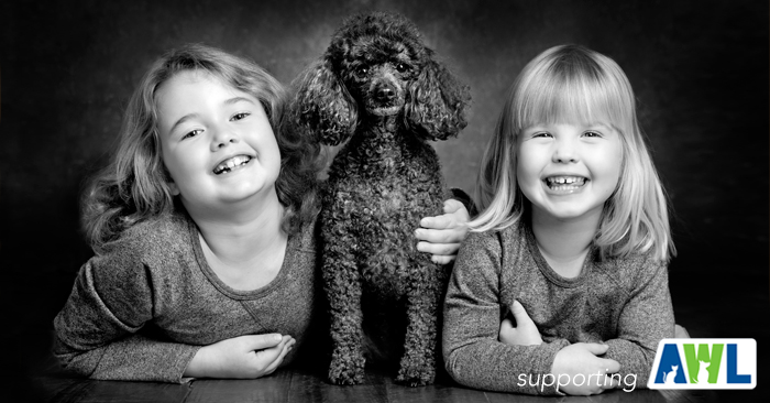 8 fluffy dog photography adelaide sa south australia.jpg