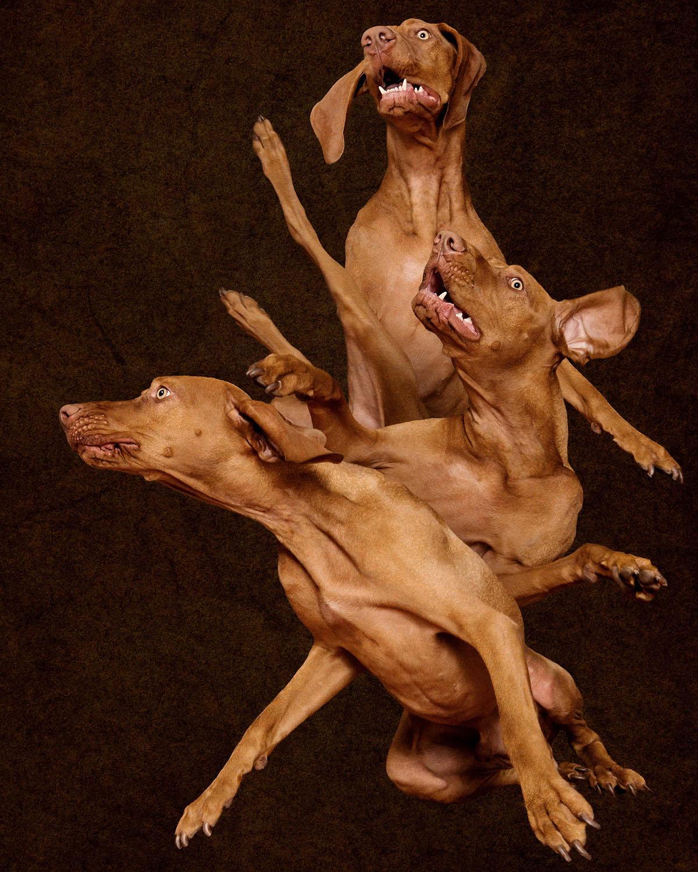 Adelaide Sa South Australia Award Best Win Winning Pet Photo Photographer Photography_009.jpg