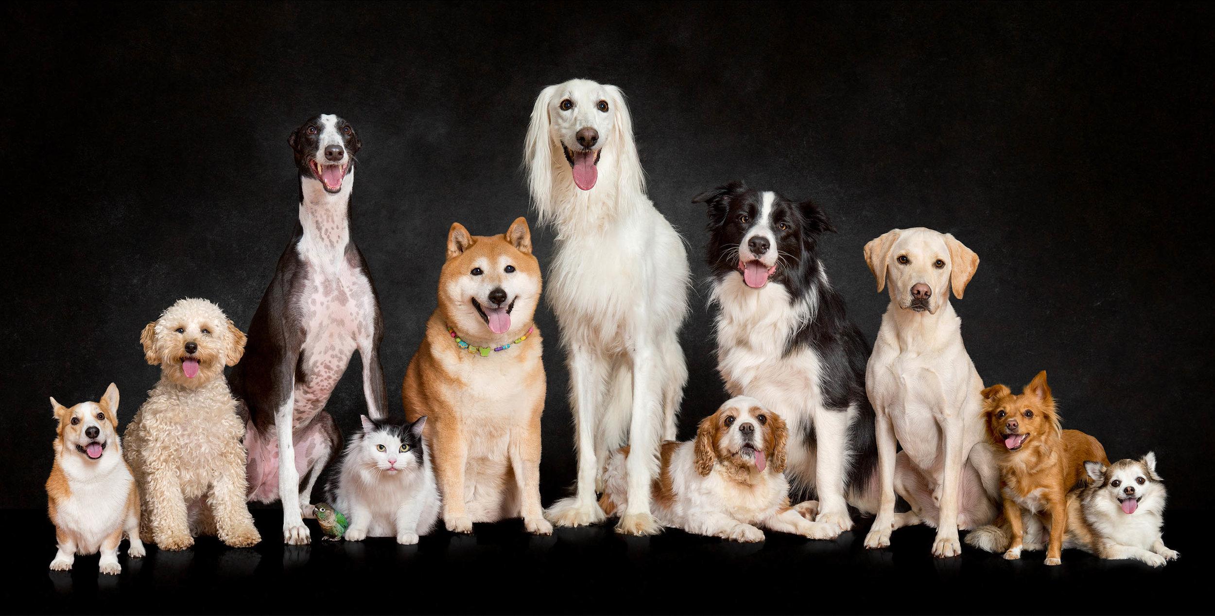 Adelaide Sa South Australia Award Best Win Winning Pet Photo Photographer Photography_011.jpg