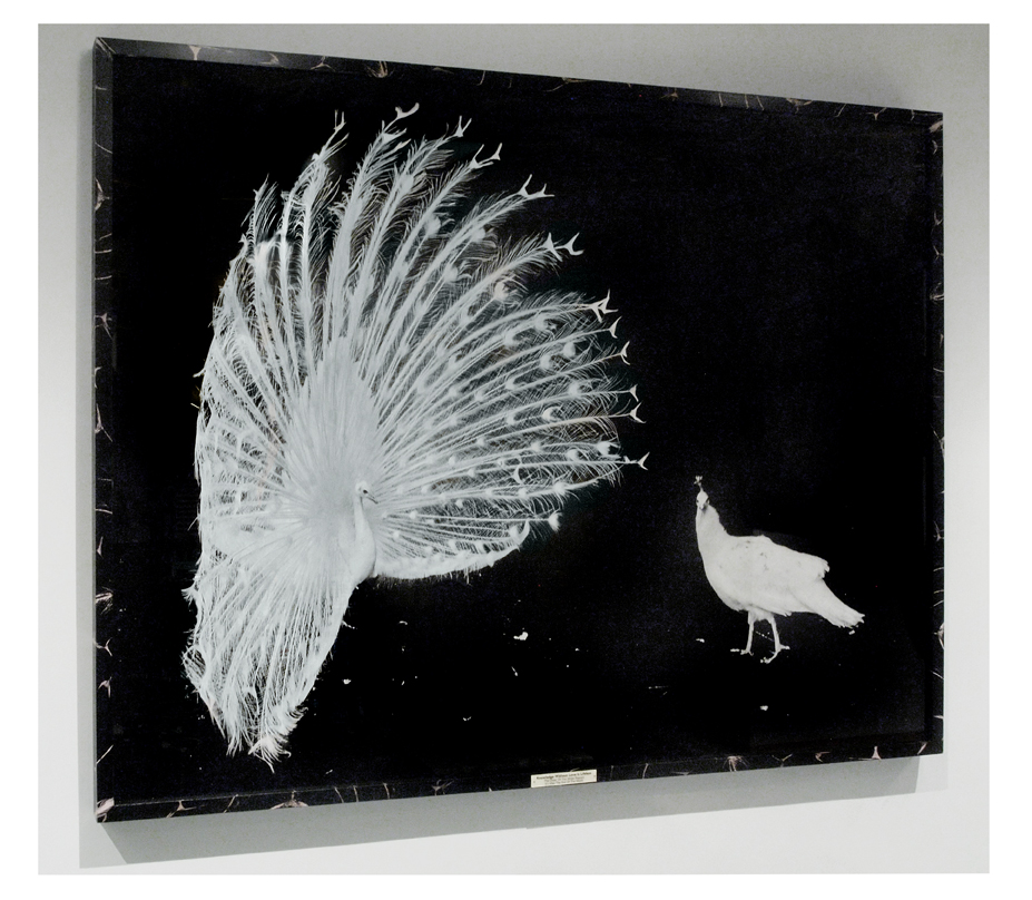 'Knowledge Without Love is Lifeless' 50 inches by 60 inches Giclee in an Image Transfer Box with an Ivorine Title Plaque