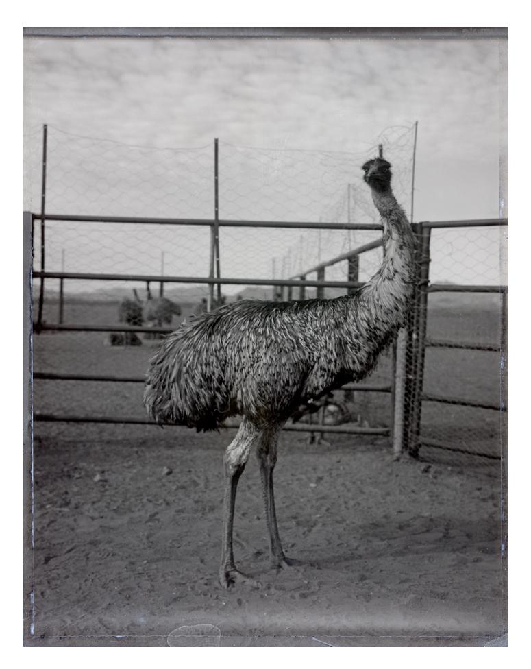 Emu Holy Smoke.jpg