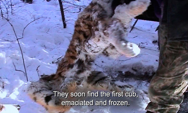 12_Frozen_Cub-WEB.jpg