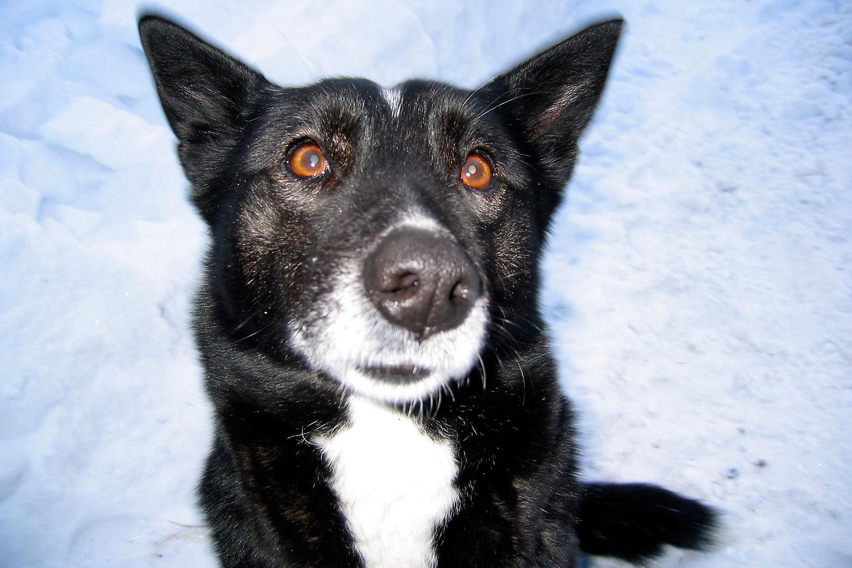 08-Yuri's-Hunting-Dog-WEB.jpg