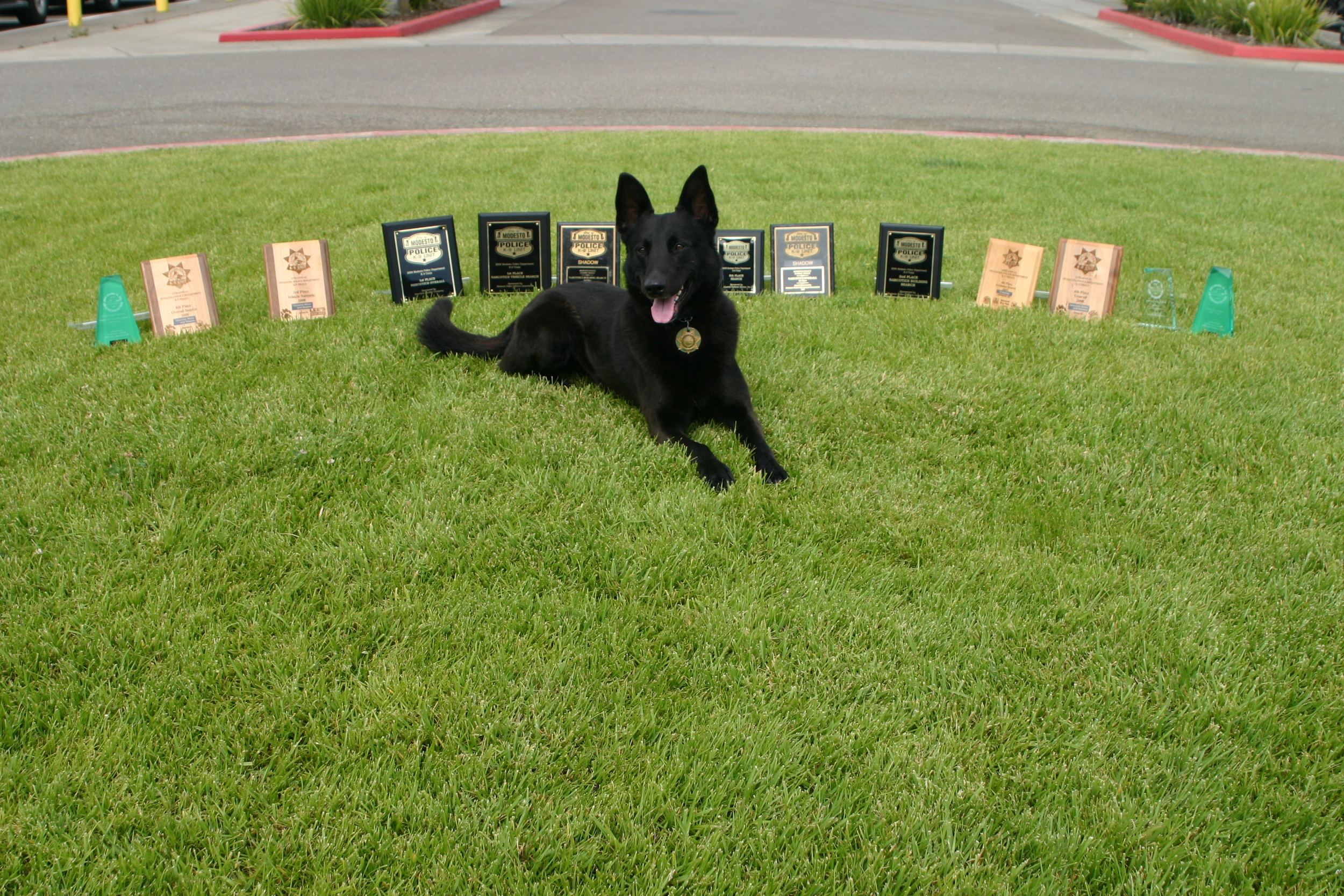 An SCSO K9 basks in the sun for a moment of rest with well-deserved awards.