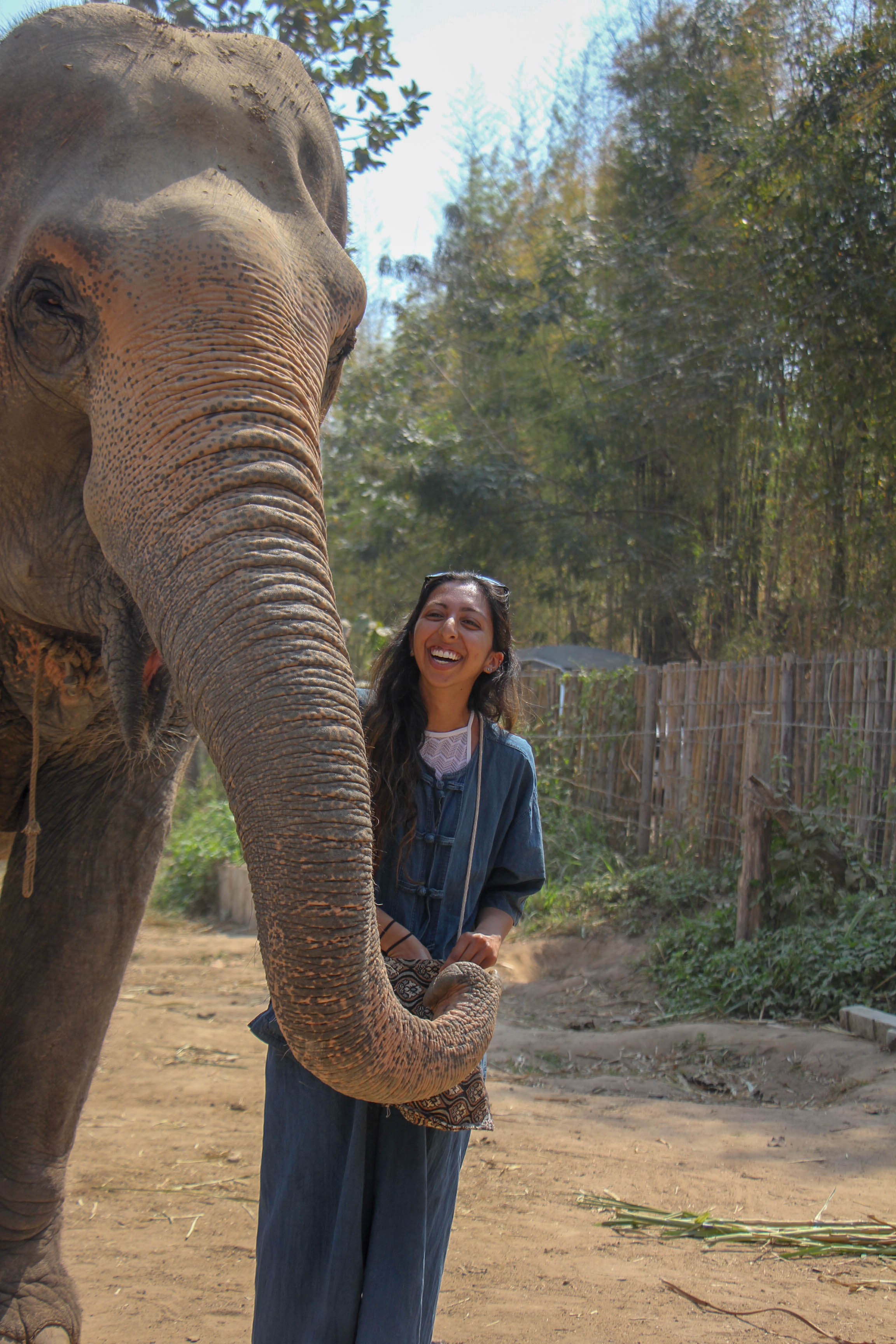 Thailand - Isha Darbari, a senior physiology and neurobiology major, travels through southeast Asia. This elephant was one of her favorite friends she made on the trip!