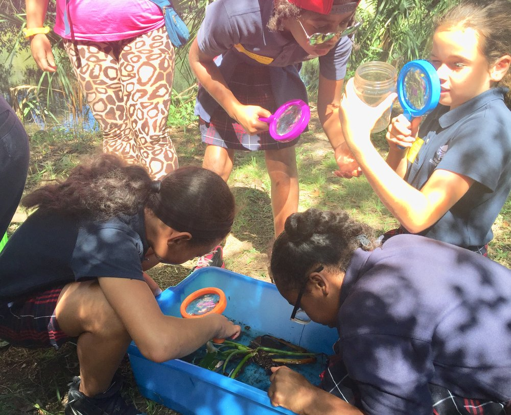 BIRDS AND BUGS ON THE BAYOU: Observing Organisms in Their Habitats -