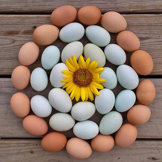 Local Cooling Farm's Pastured Raised Eggs -