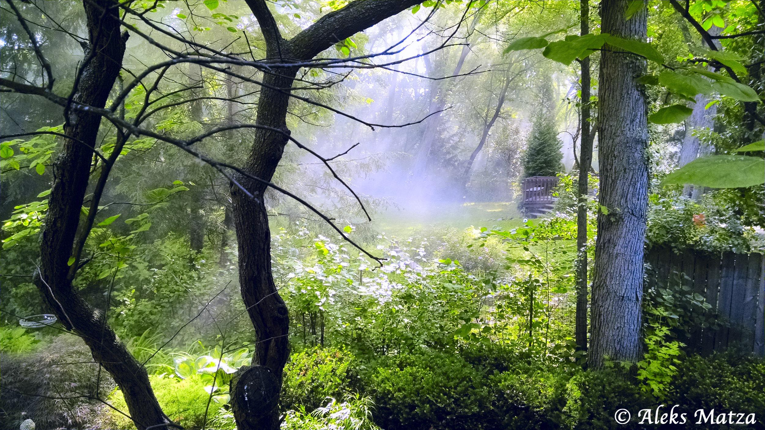 Backyard Morning 2.jpg