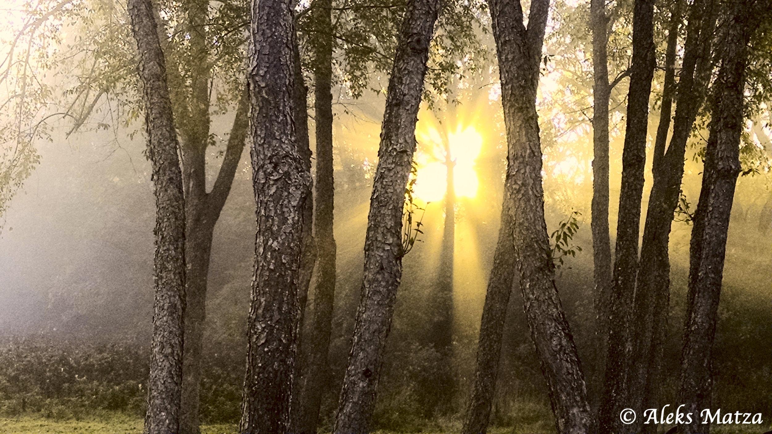 Forest Sunrise 2.jpg