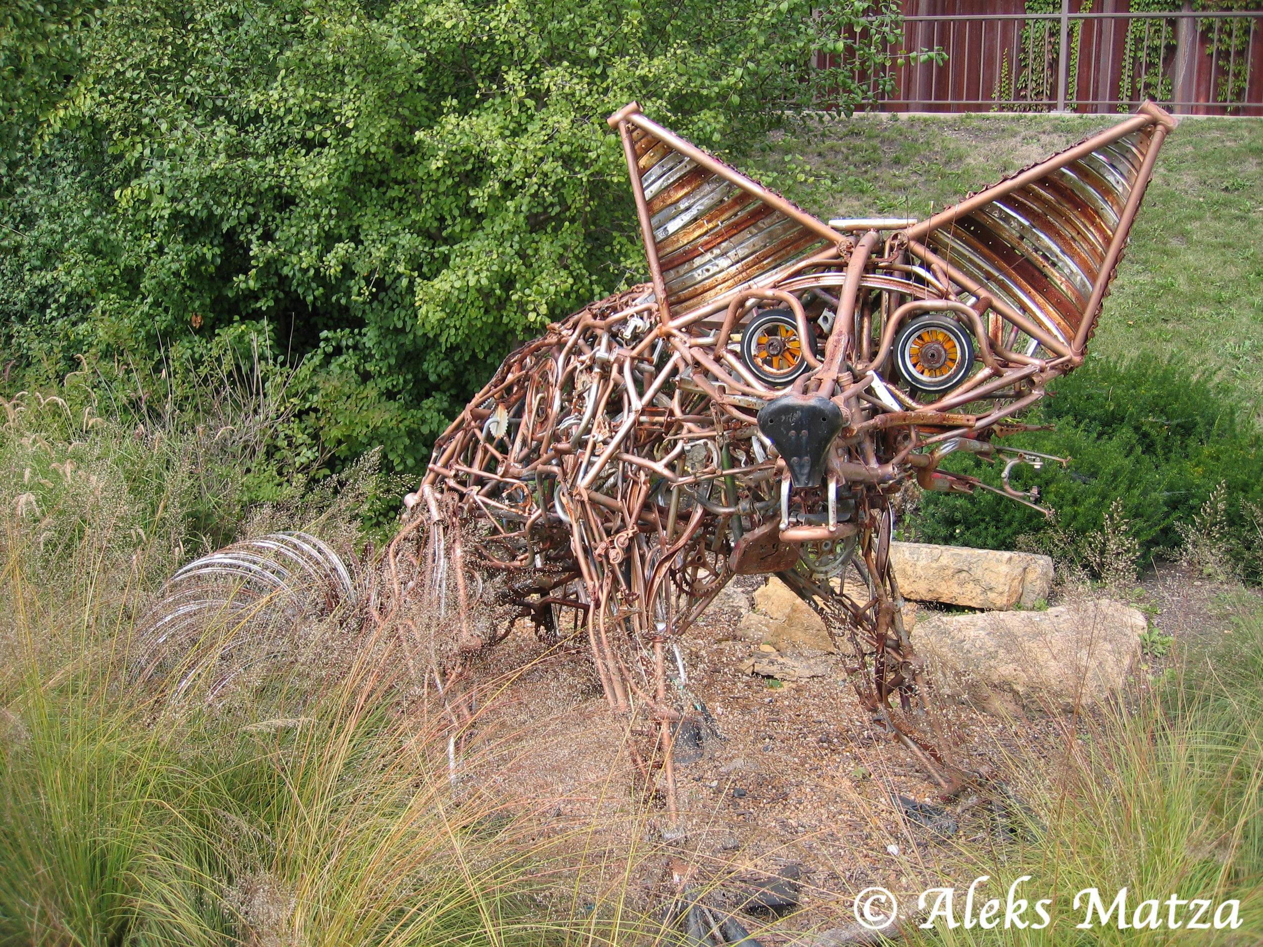 Fox River Fox 2.jpg