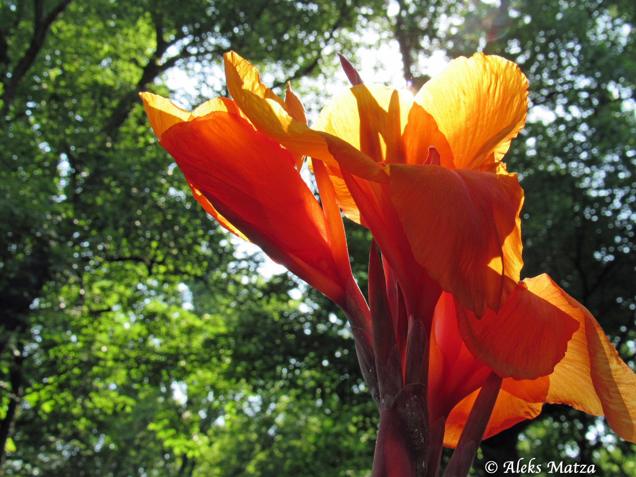 Sun Flower 2.jpg