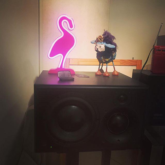 חדש באולפן, פלמינגו ורוד, ברכה ללייקים ושרים! #pinkflamingo