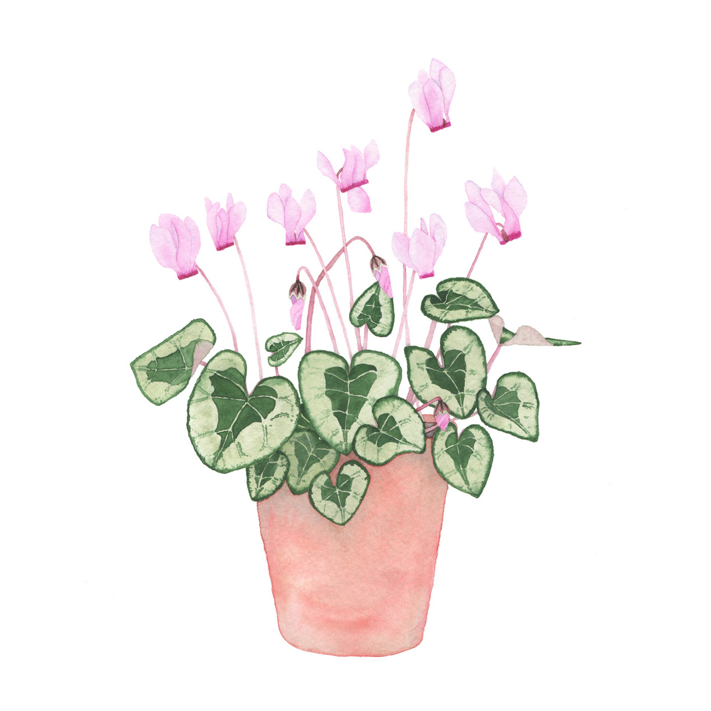 Pink Cyclamen in a Clay Pot by Anne Butera