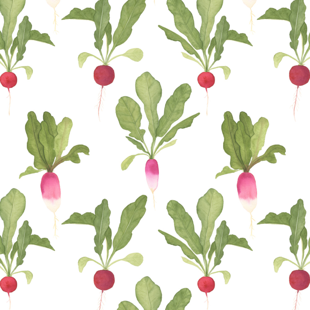 watercolor radishes