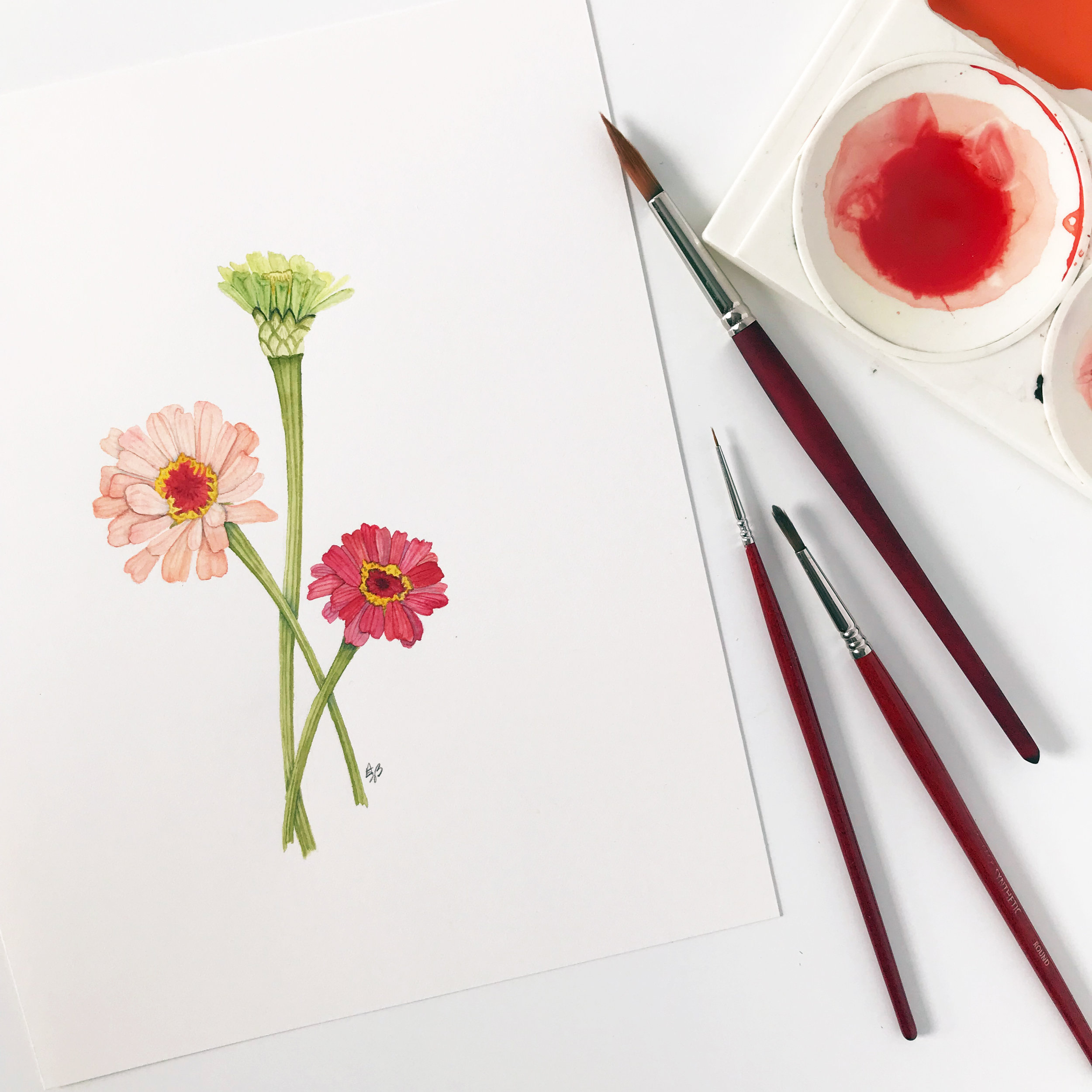 This new watercolor painting of three zinnia flowers is now available in my shop