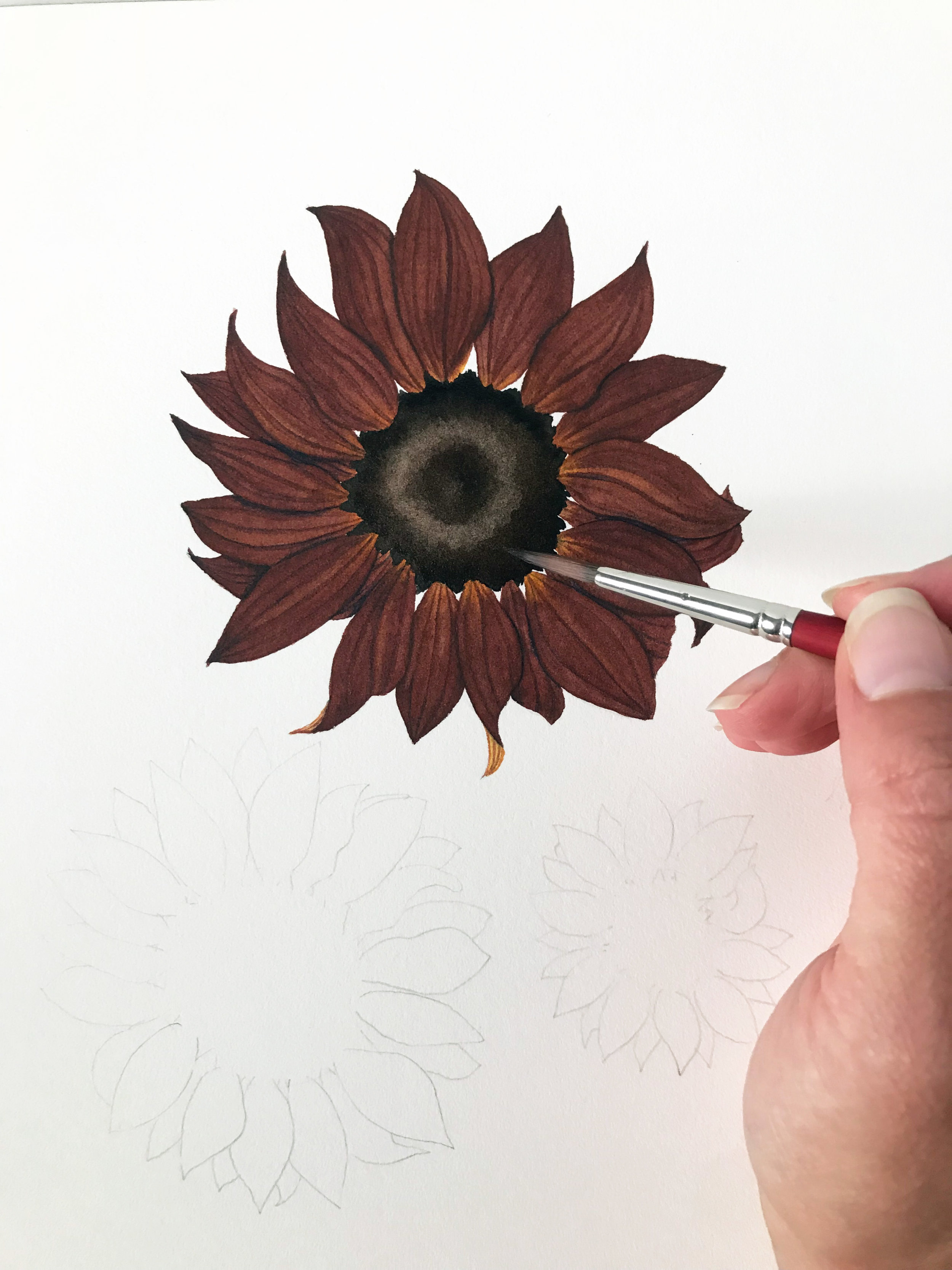 The Process of Painting a Sunflower with Watercolor Involves Many Layers