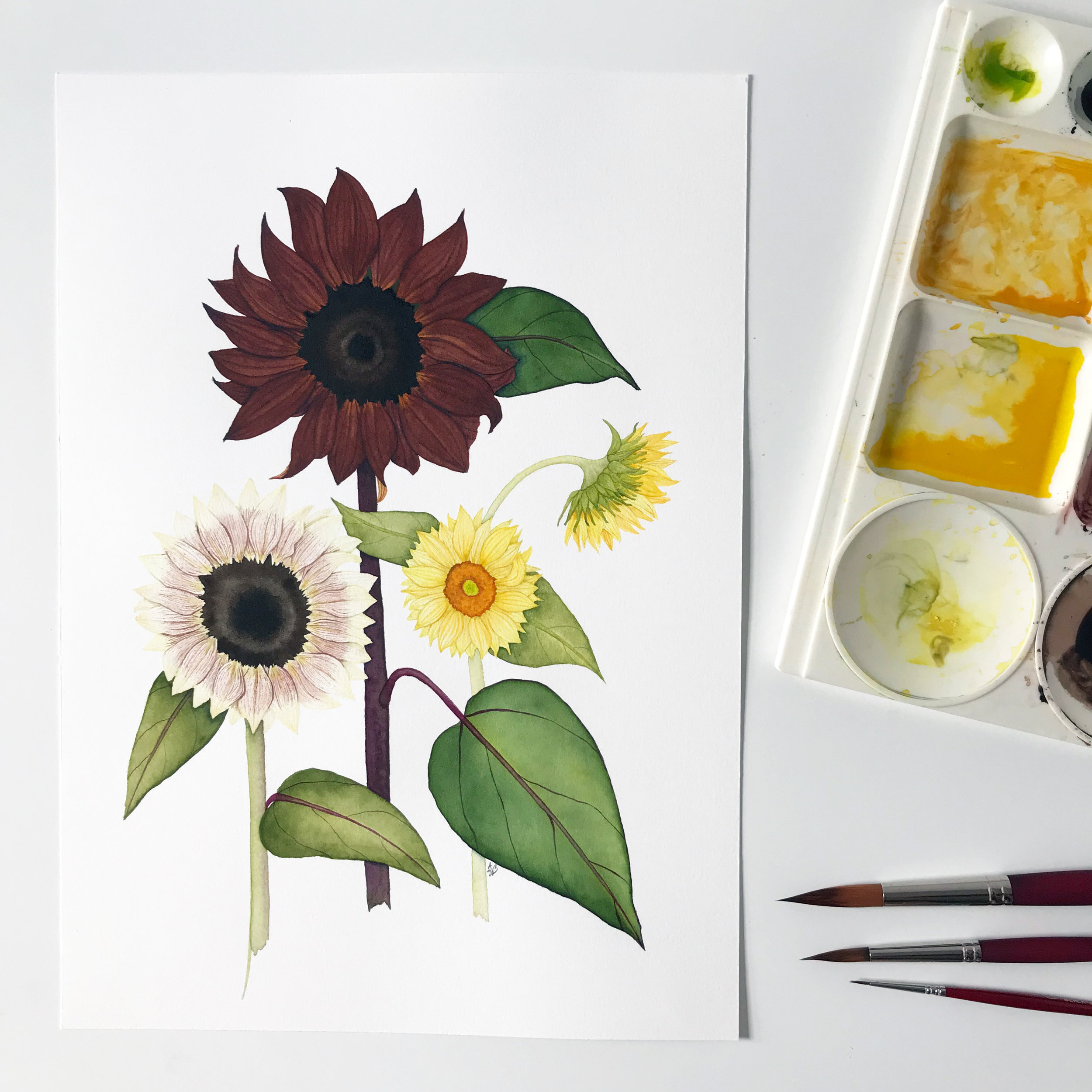 A Finished Watercolor Painting of Summer Sunflowers by Anne Butera of My Giant Strawberry
