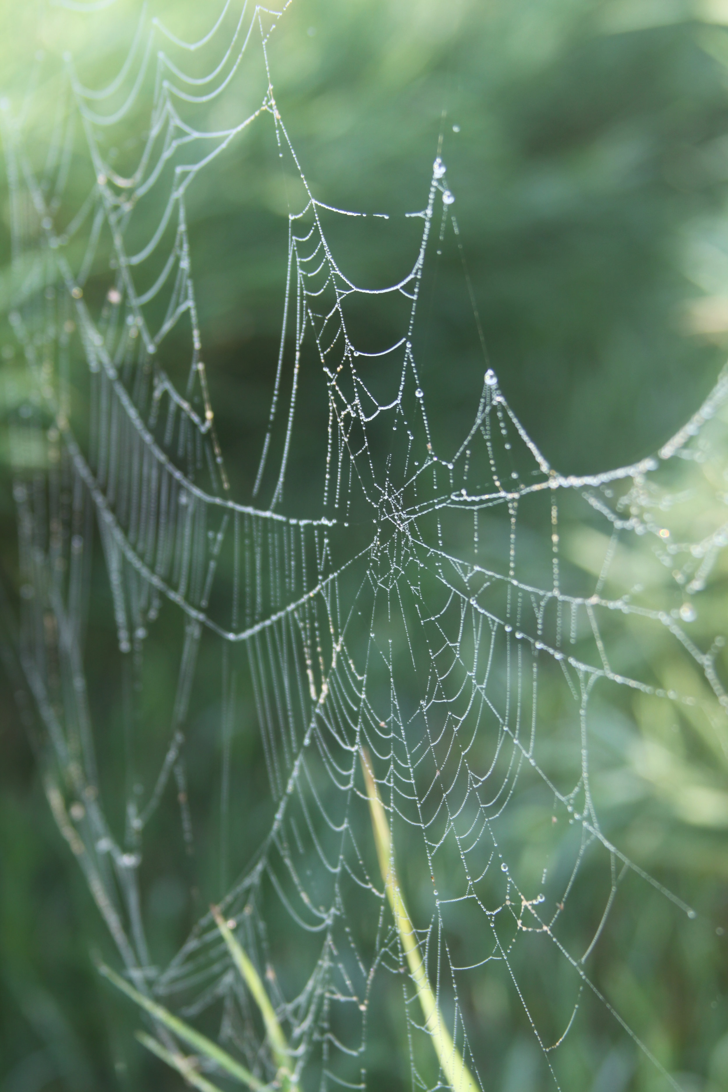 A Dew Gilded Spider's Web