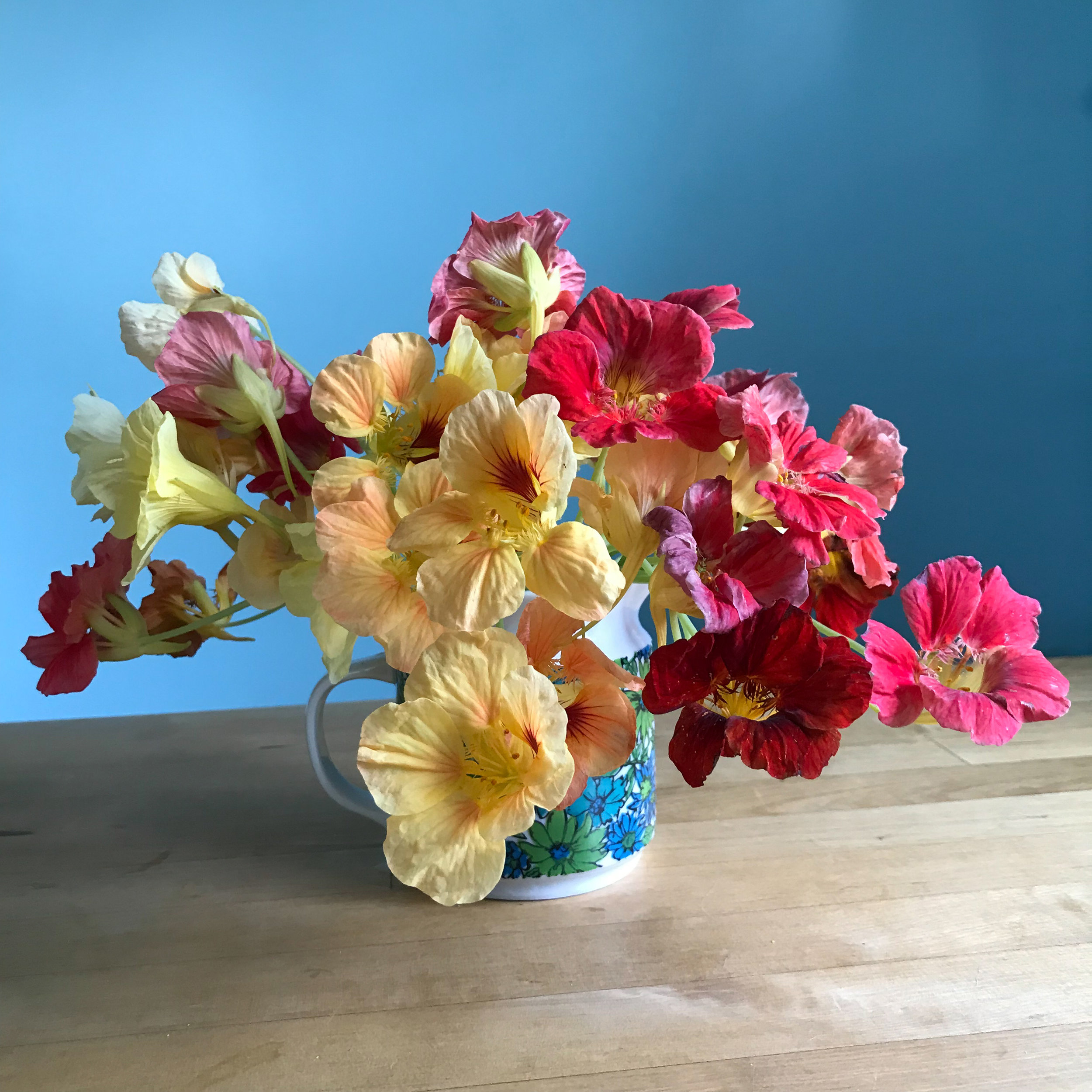 A Mug Filled with a Colorful Bunch of Nasturtium Flowers