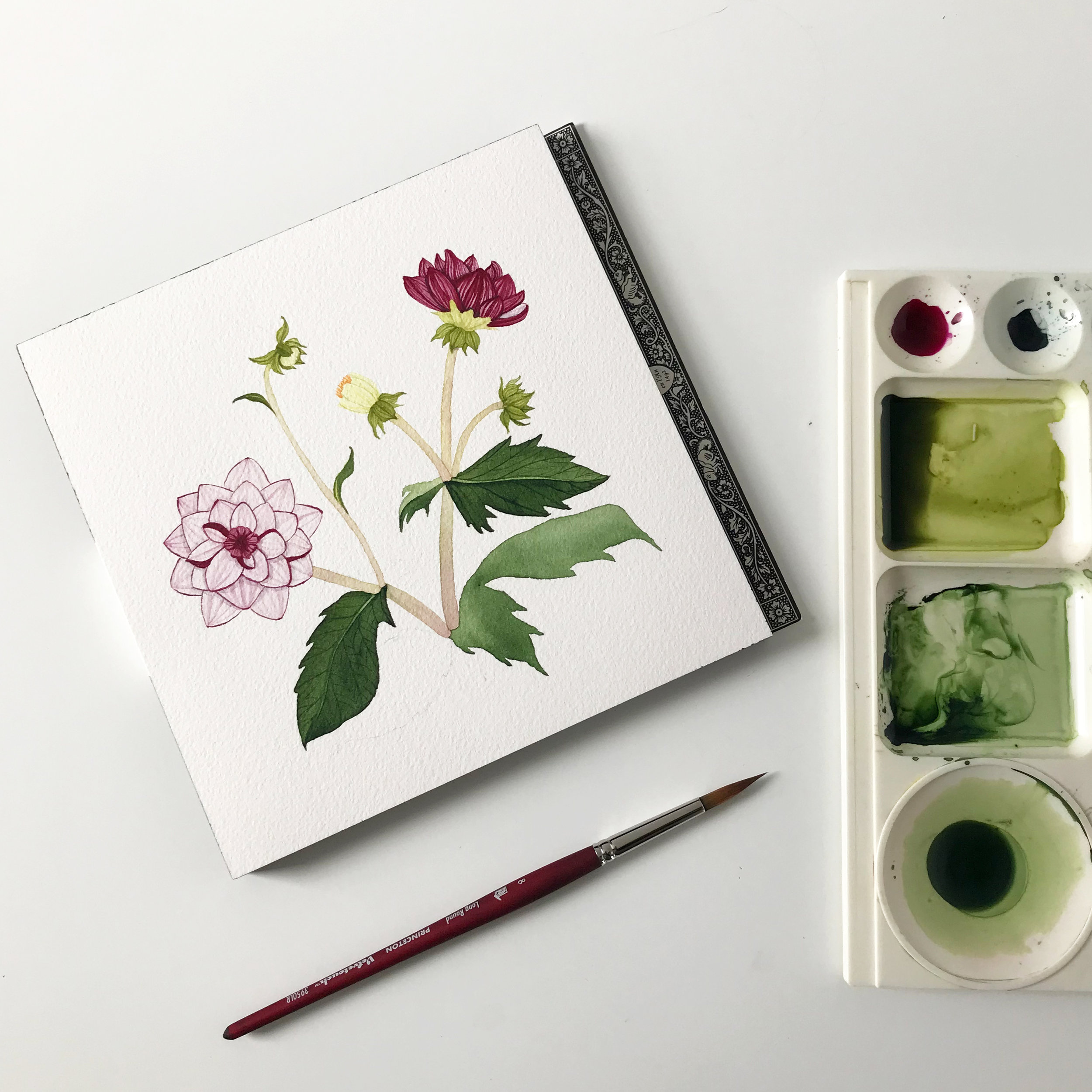 A Watercolor Painting of Dahlias in Progress in My Studio