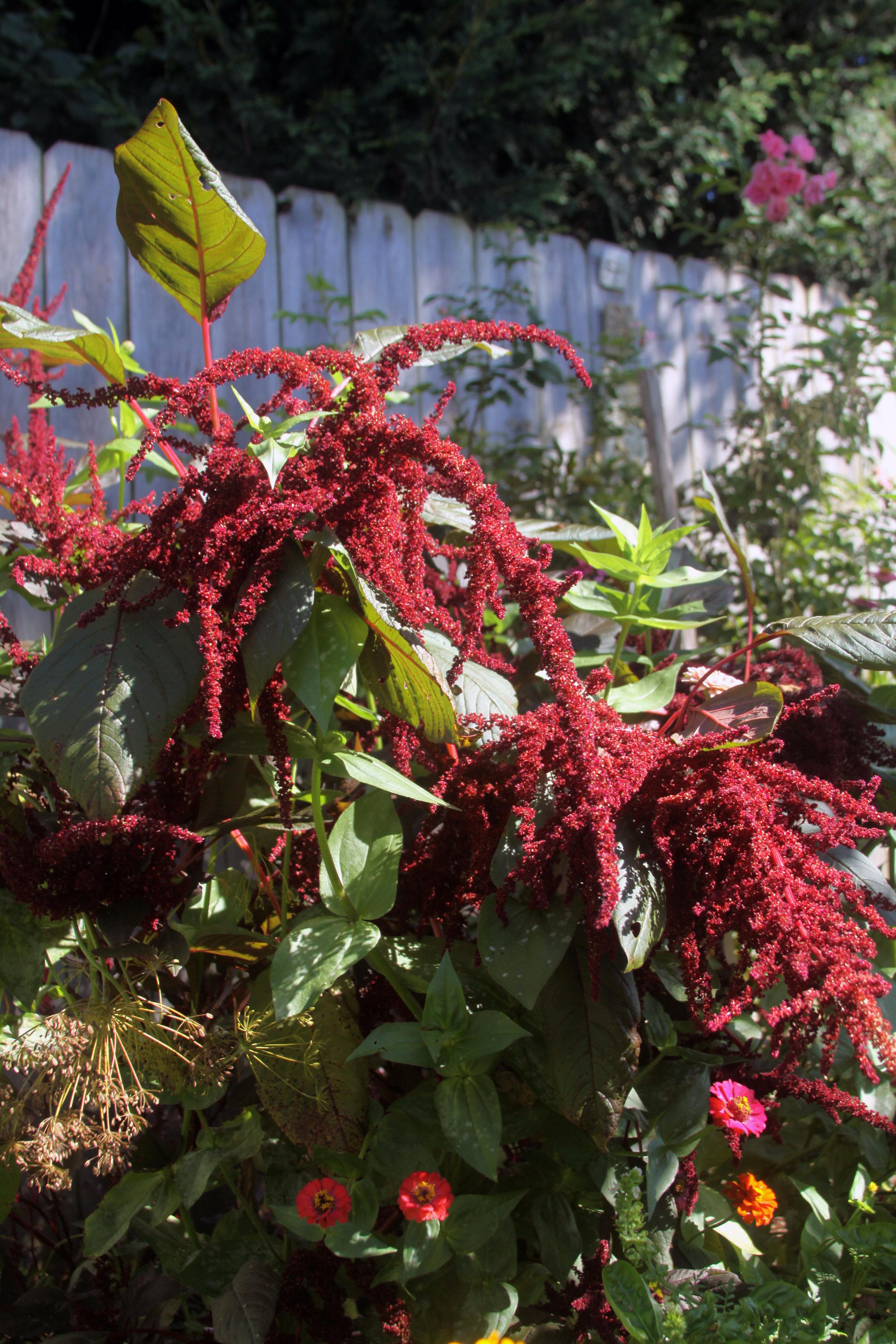 A Jumble in My September Garden