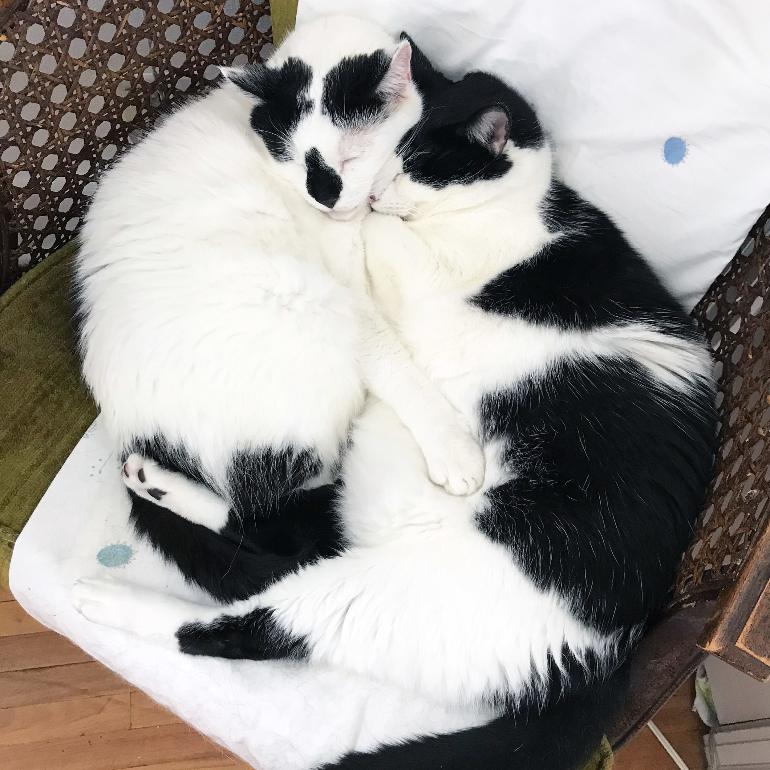 My Black and White Rescue Cats in Their Usual Place in the Chair in My Studio