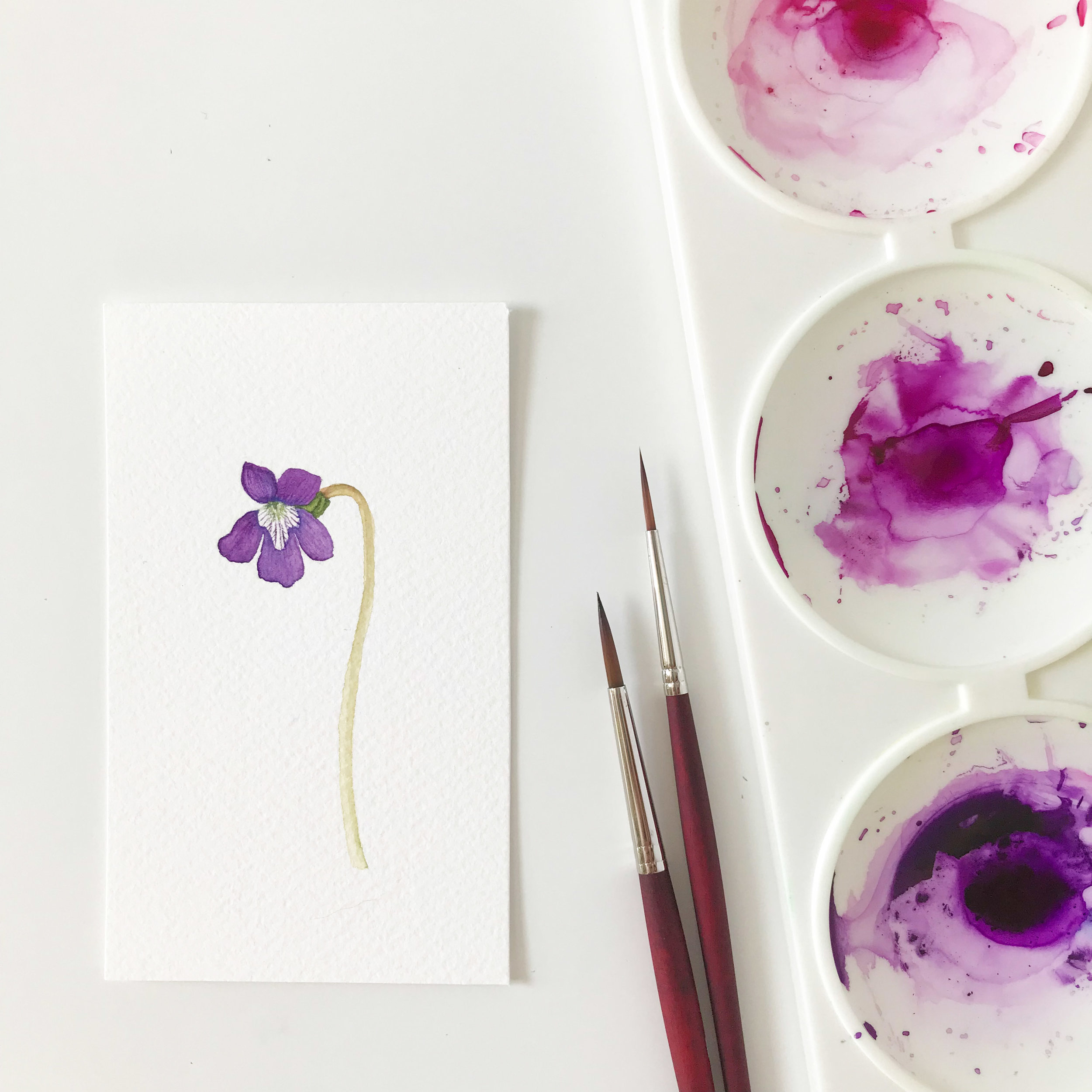 Watercolor Violet Painting by Anne Butera