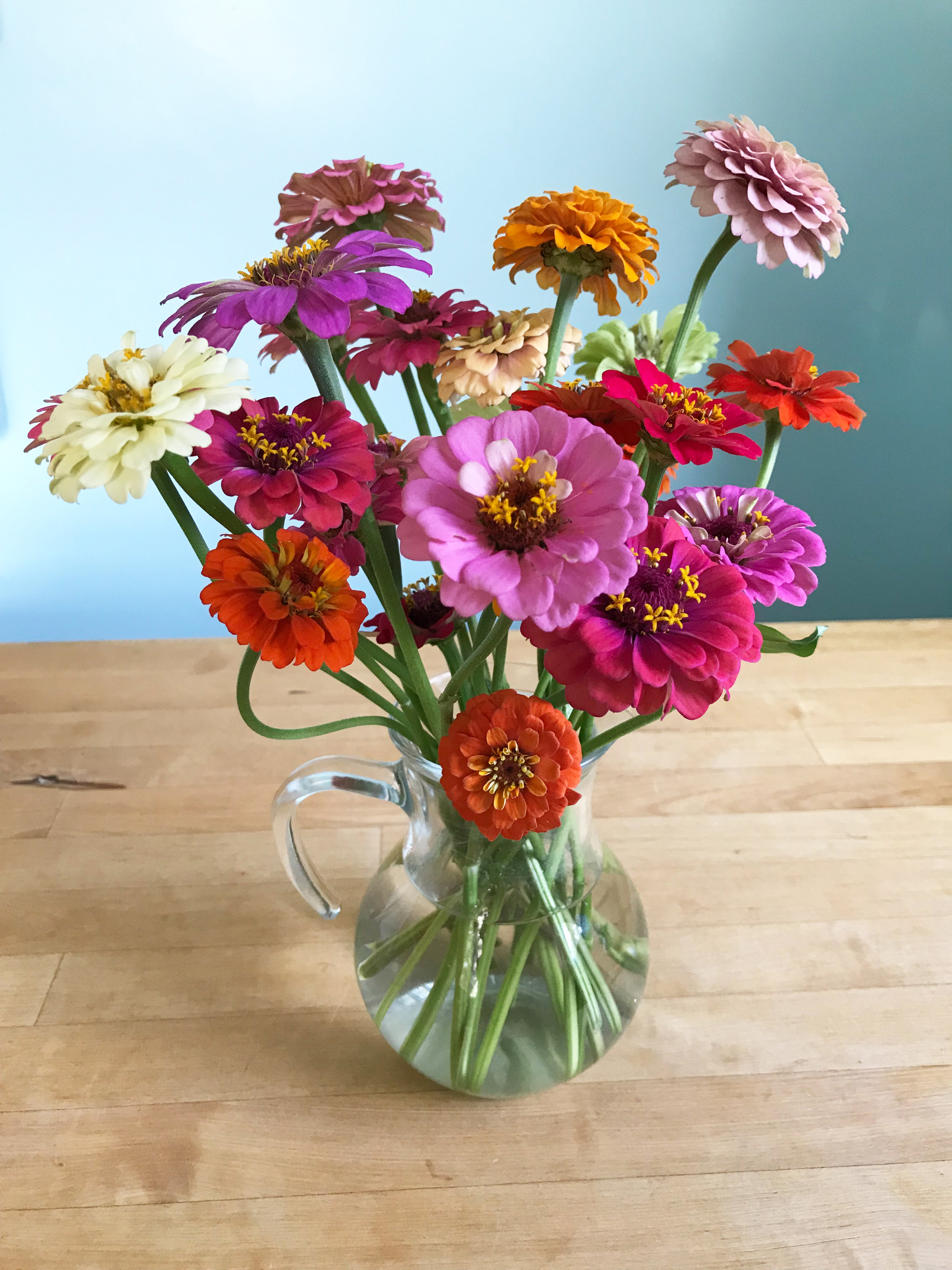 Cut and Come Again Zinnias from My Garden