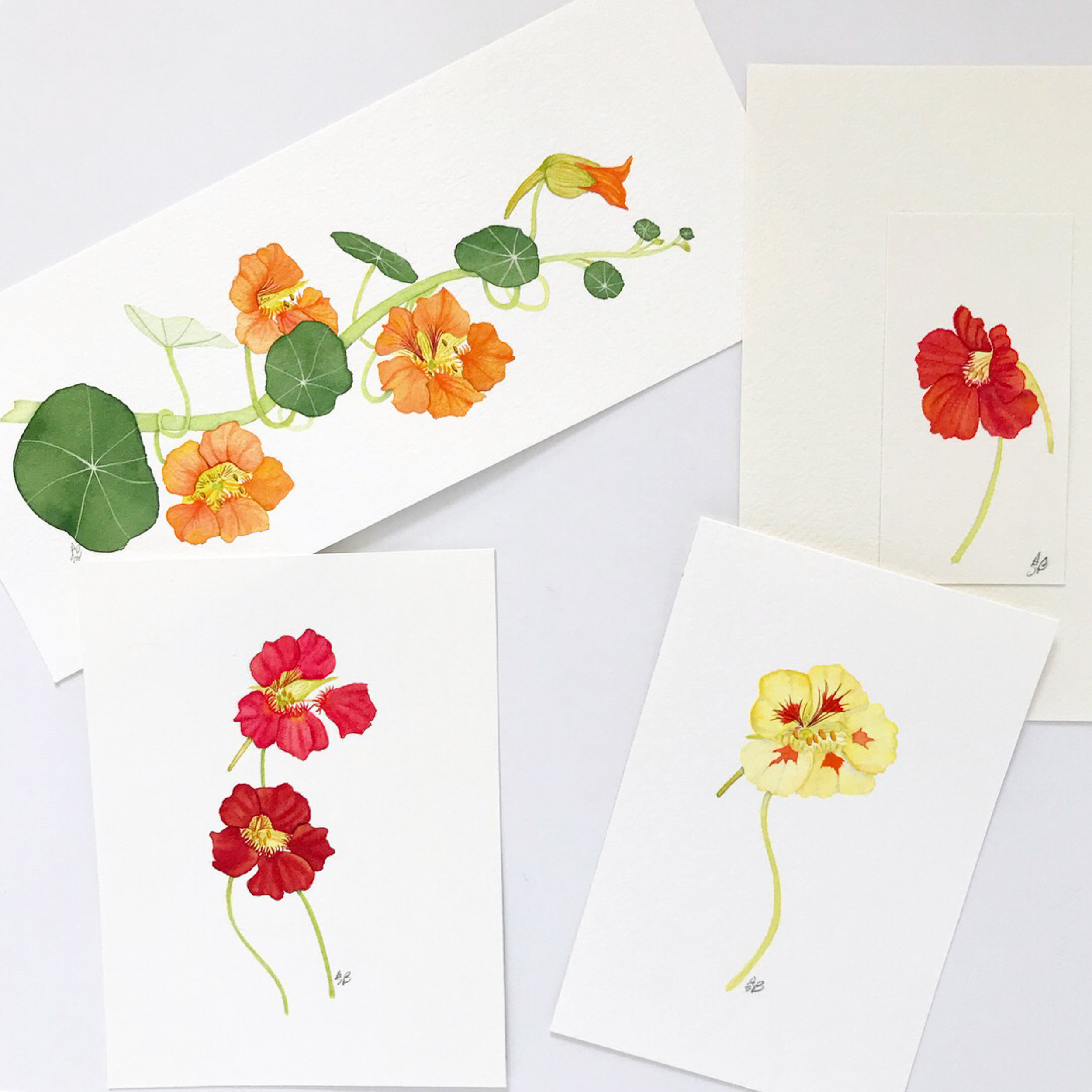 a selection of nasturtium paintings — all are available  in my shops