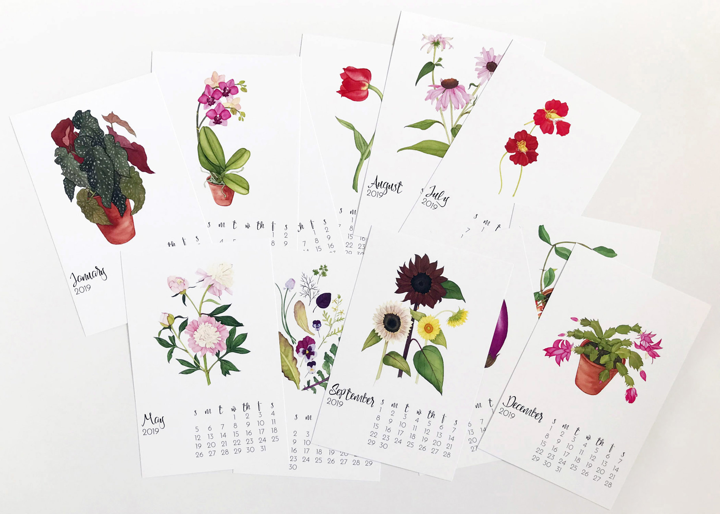 The 2019 Botanical Watercolor Calendar by Anne Butera of My Giant Strawberry