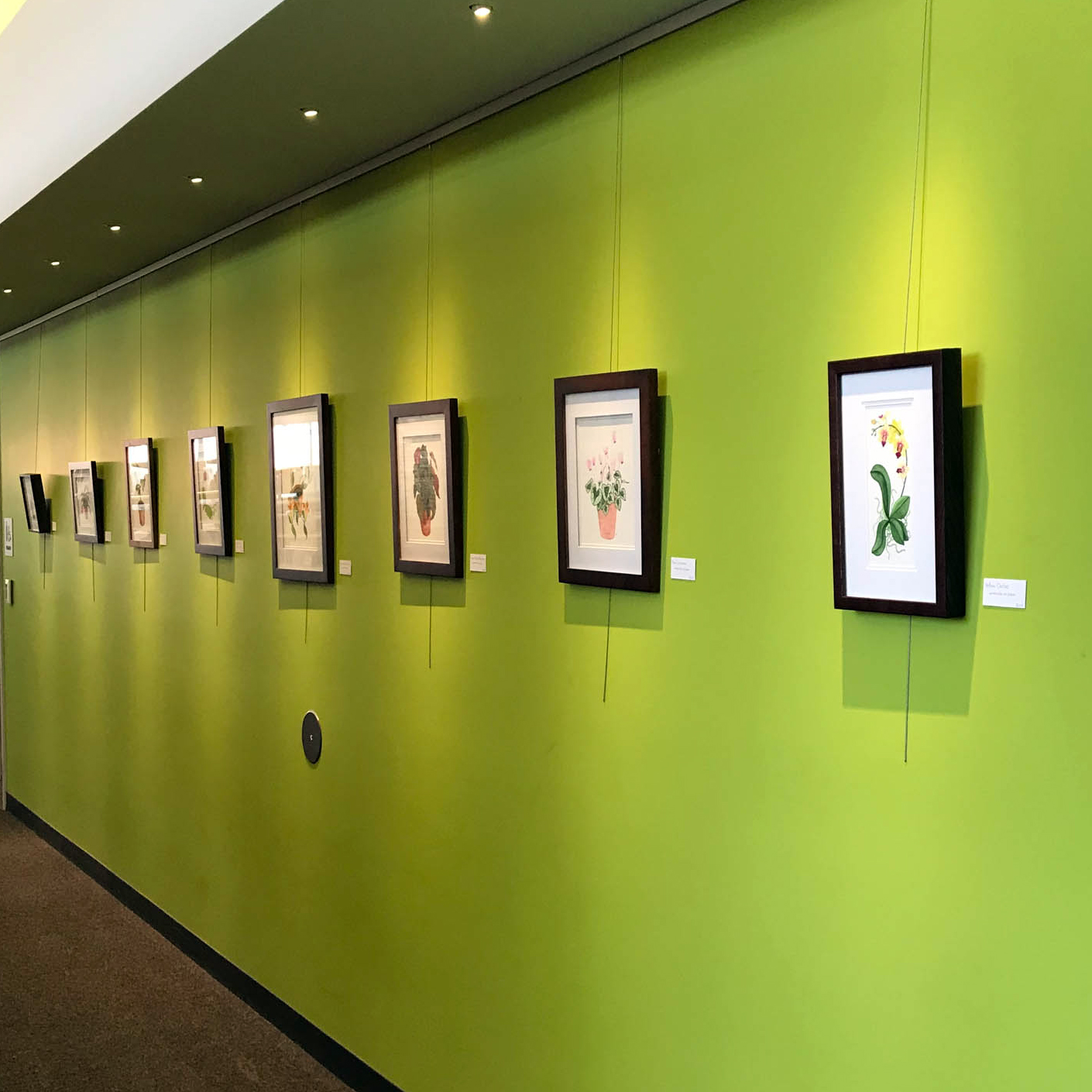 Paintings by Anne Butera on Exhibit at the McIntosh Memorial Library in Viroqua, Wisconsin in February of 2018
