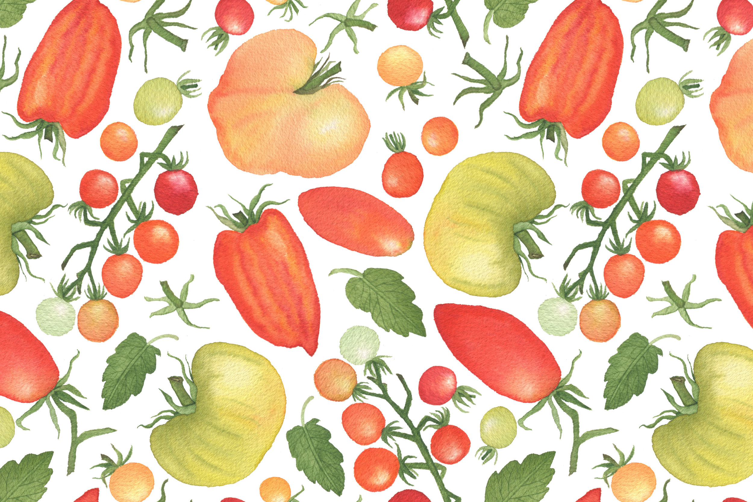 A New Watercolor Pattern of Tomatoes by Anne Butera of My Giant Strawberry