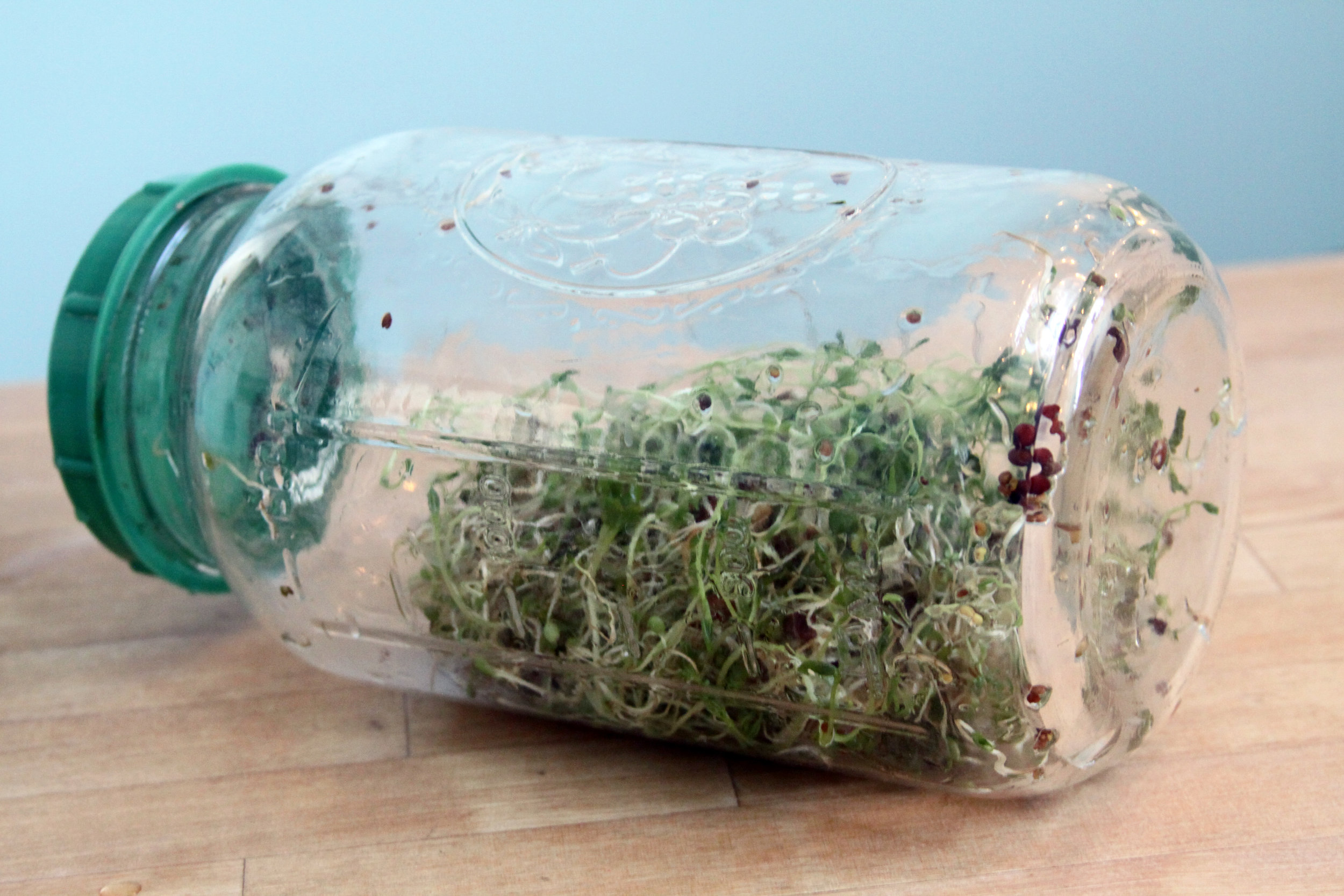 Anyone Can Grow Sprouts Inside for Fresh Greens During the Winter