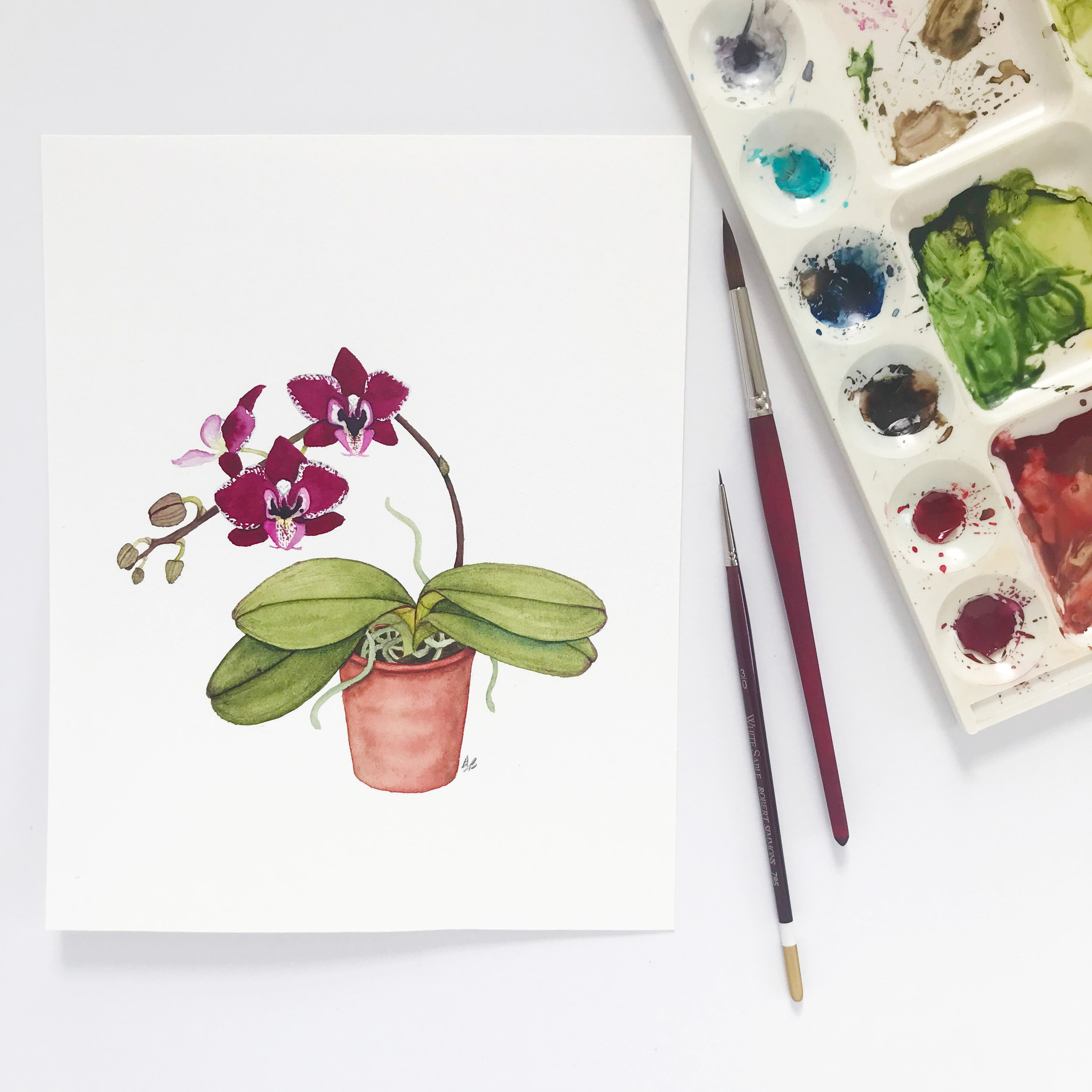 Dark Wine Orchid in a Clay Pot Watercolor Painting by Anne Butera