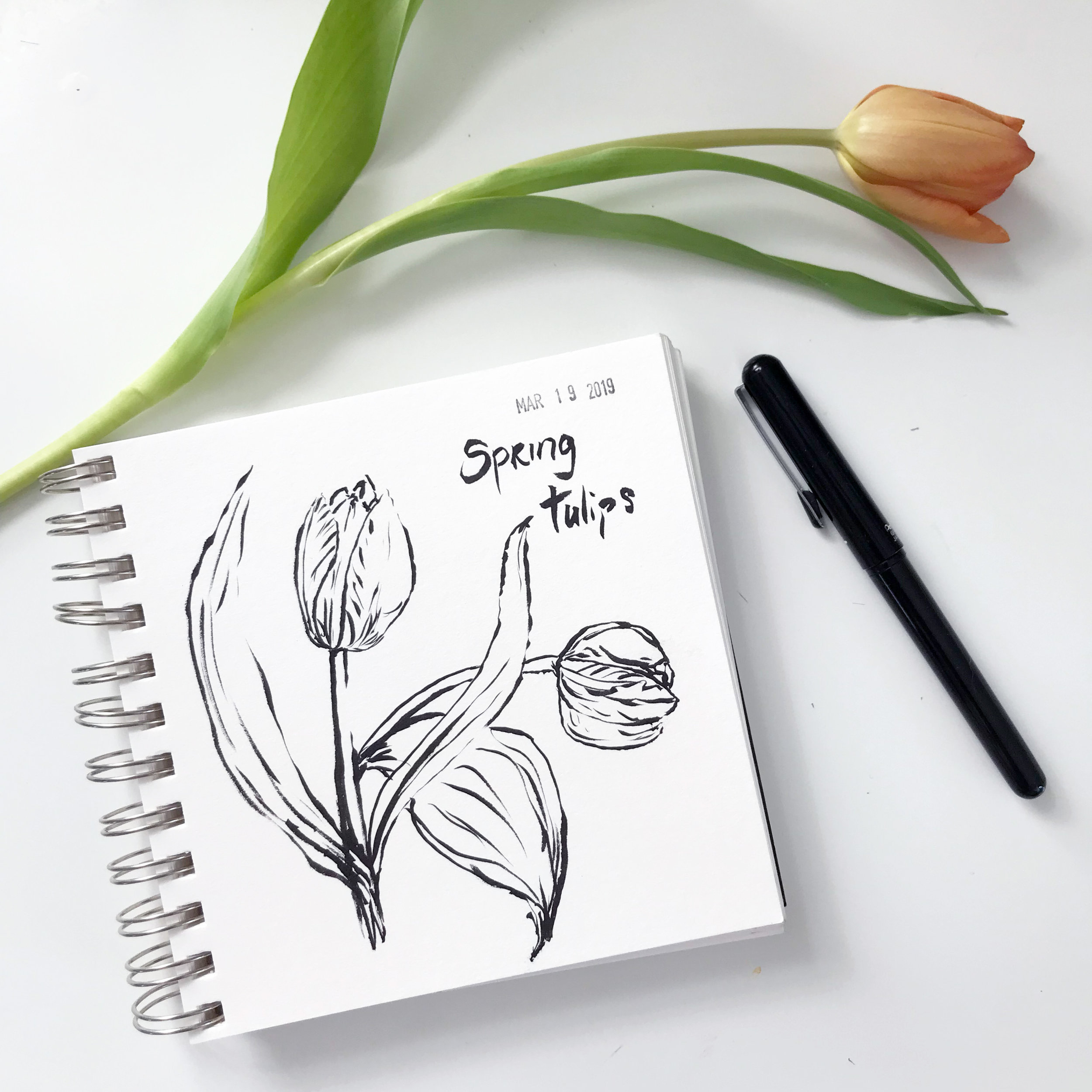 Tulips Sketched with the Pentel Brush Pen in My Sketchbook