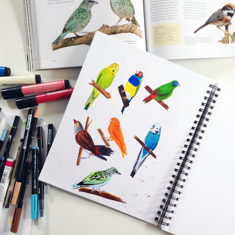 Birds in Marker in Anne Butera's Sketchbook