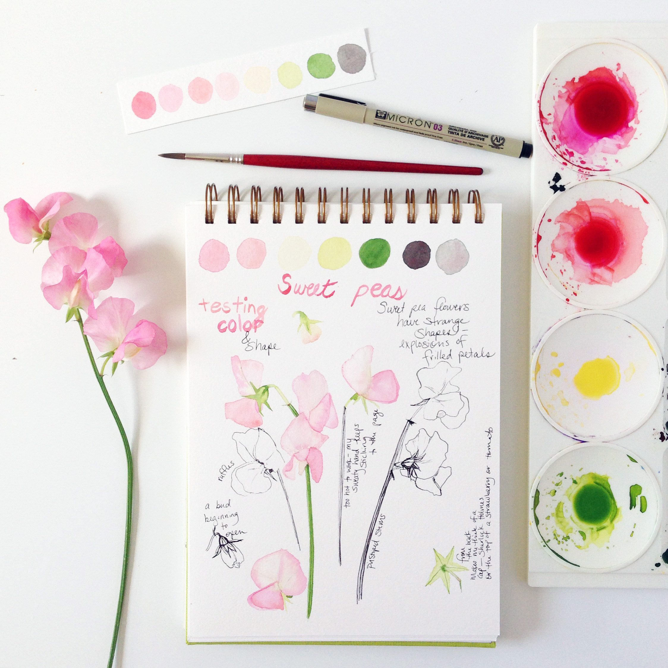 Watercolor Sweet Pea Sketches in Anne Butera's Sketchbook