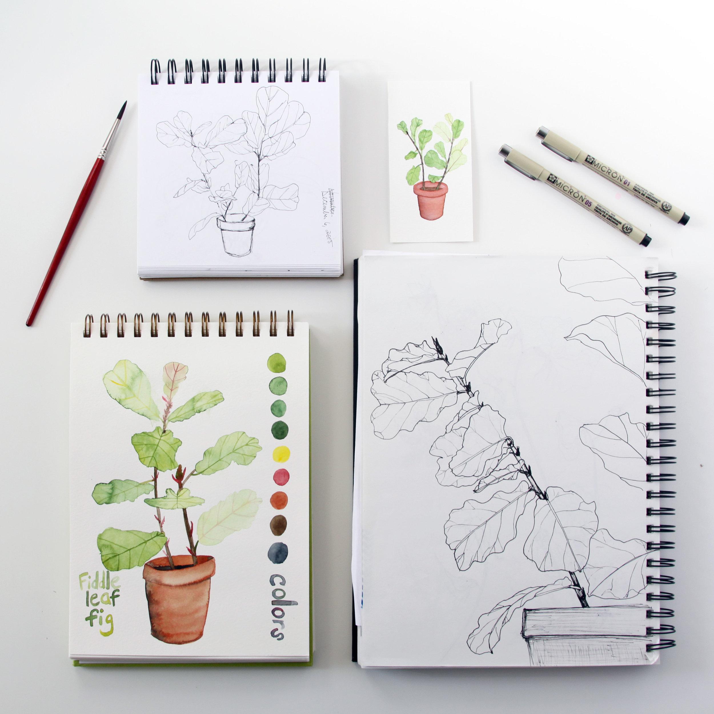Fiddle Leaf Figs in Anne Butera's Sketchbooks