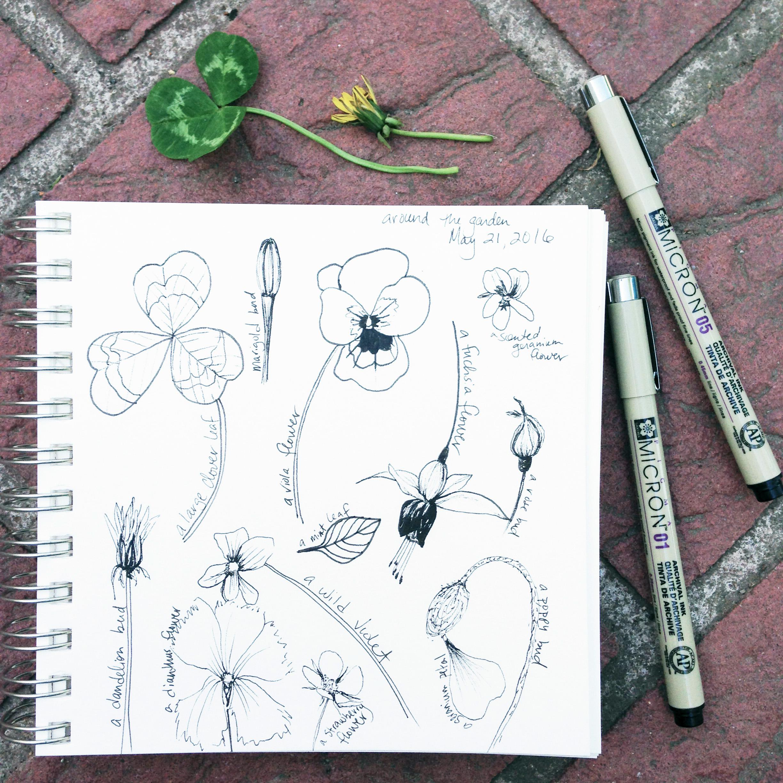 Garden Sketches in Micron Pen in Anne Butera's Sketchbook