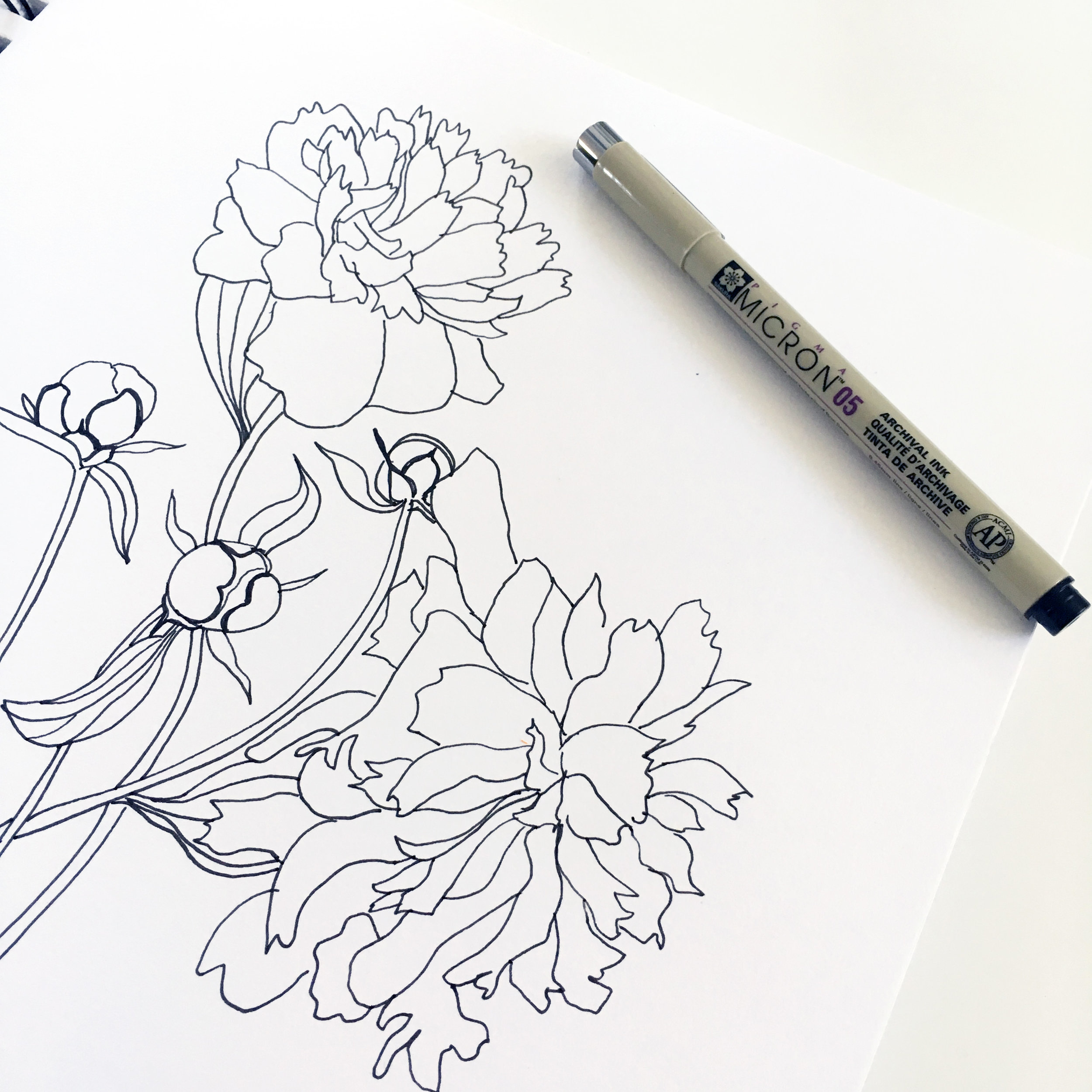 Peony Sketches in Black Micron Pen in Anne Butera's Sketchbook