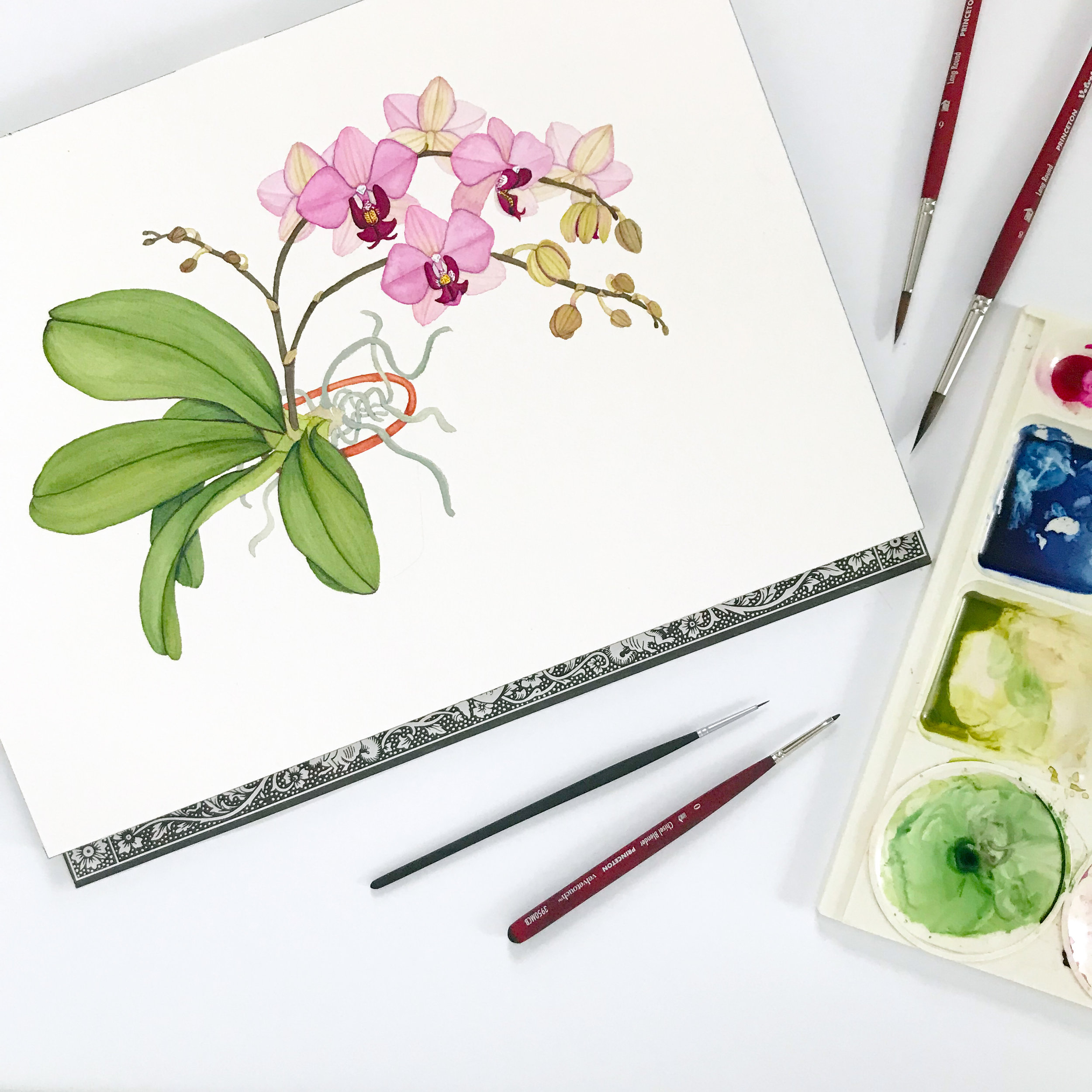 An in-process watercolor painting of an orchid in a clay pot by Anne Butera