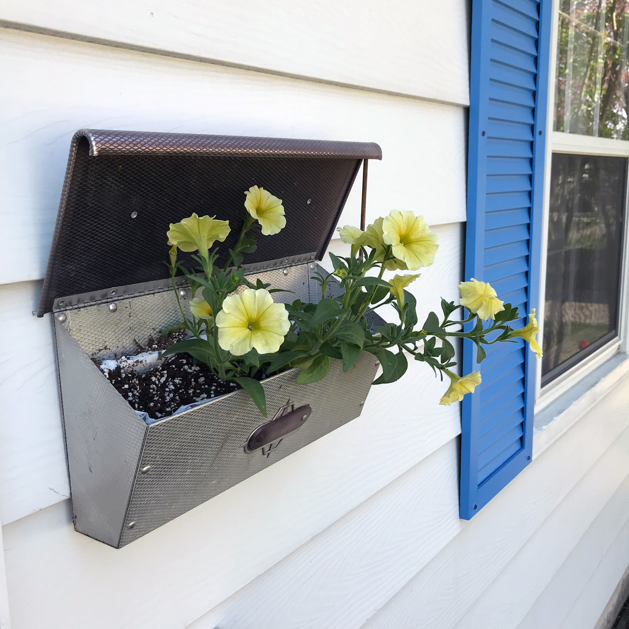 I planted Yellow Petunias in the Mailbox beside my Blue Shutters and it Brings Me Joy