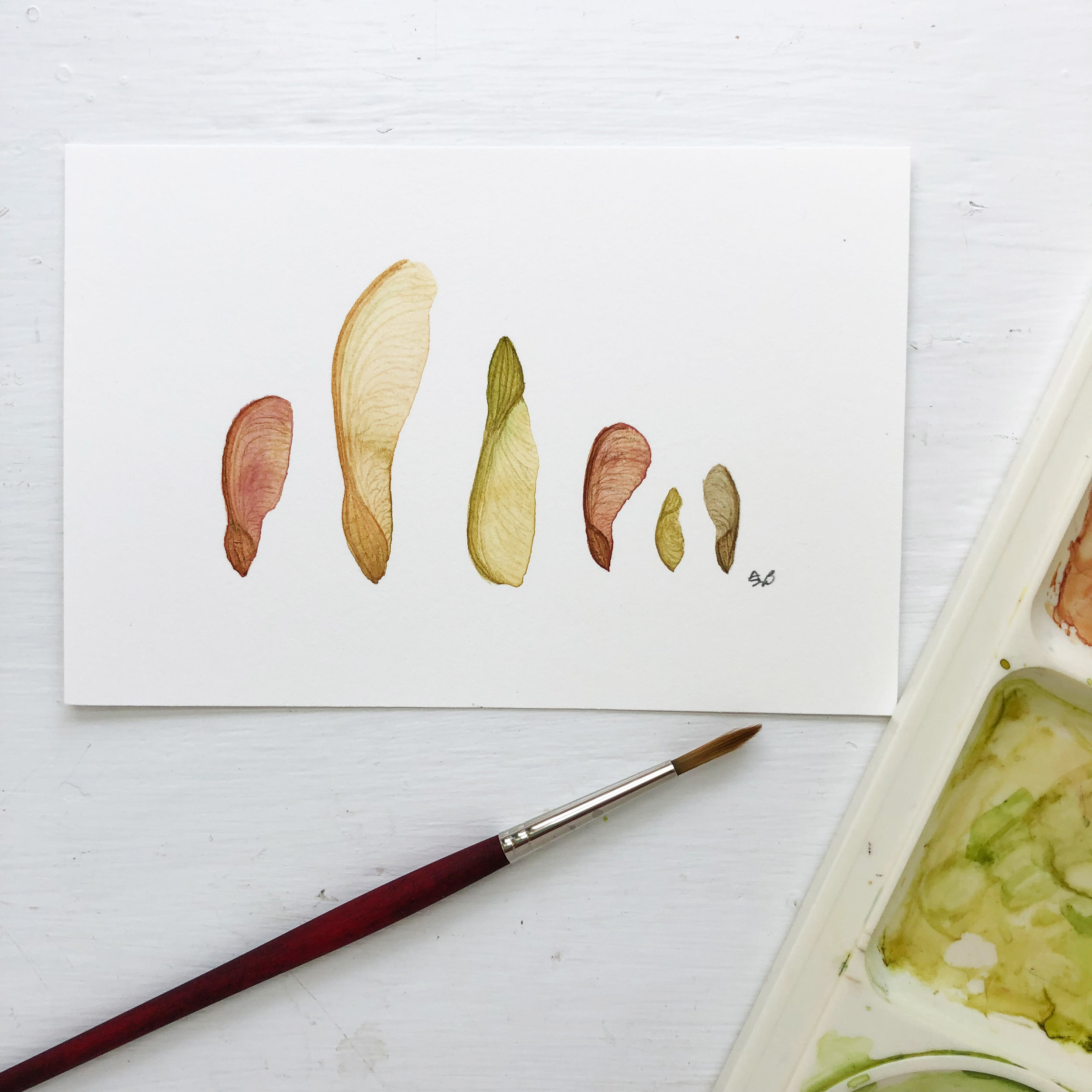 A Lineup of Maple Seeds in Watercolor by Anne Butera