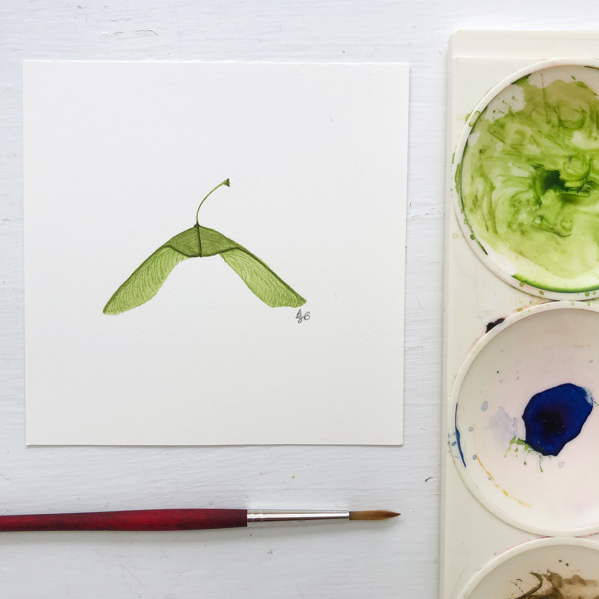 A Green Maple Seed Helicopter Painted with Watercolor By Anne Butera